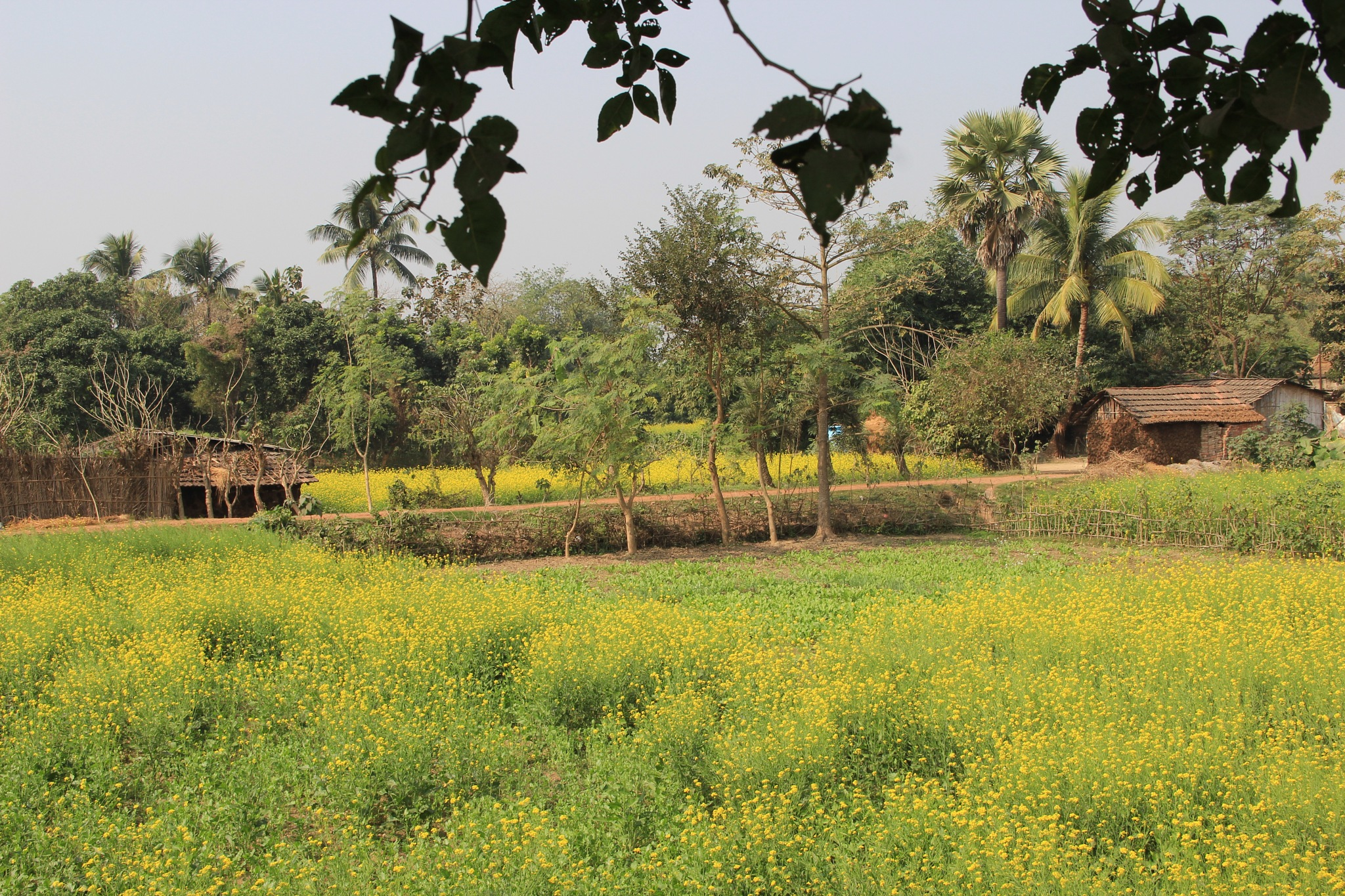 Country Side  by surajit