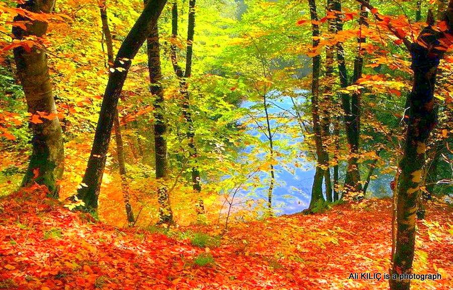 Yedigöller Natural Park is in the fall. by Ali KILIÇ