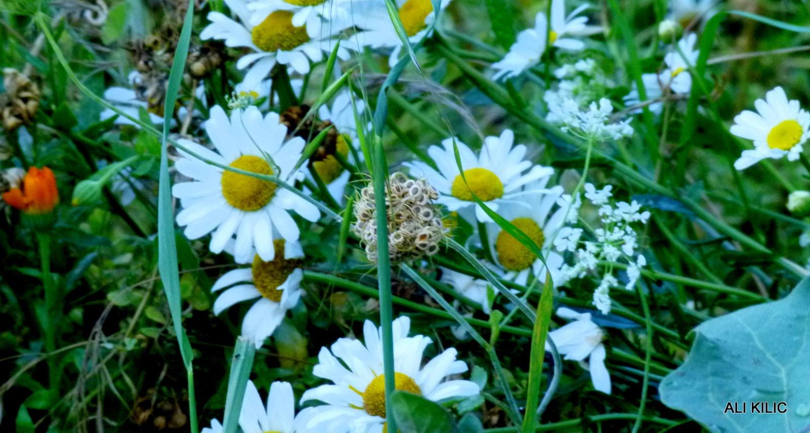 Wildflowers by Ali KILIÇ