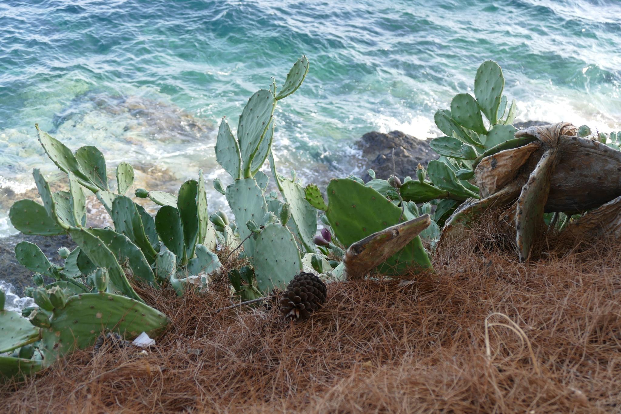 Sea and cactus by Kari