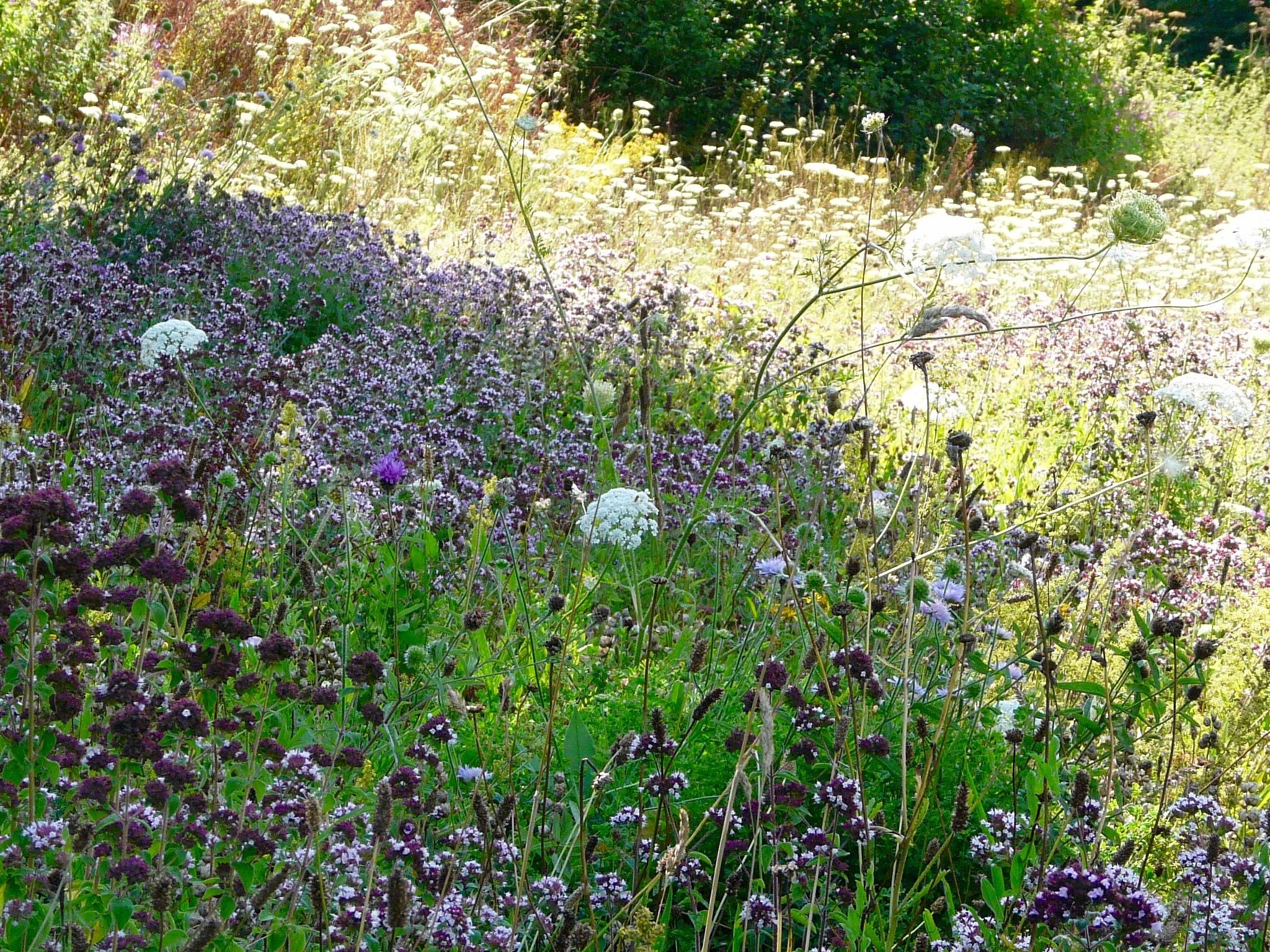 Summer Meadow by calineramsay