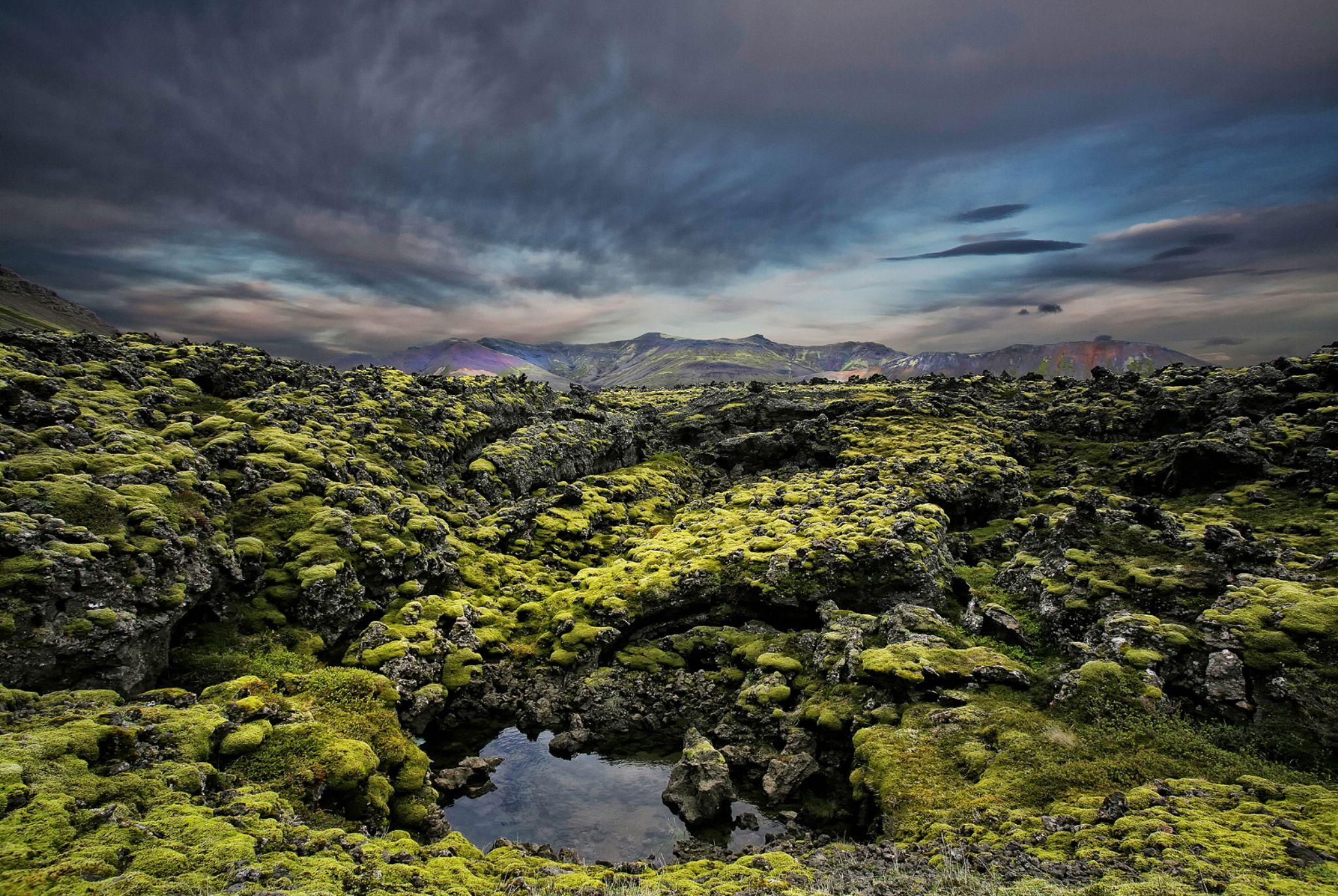 Natural Green Carpet  by Þorsteinn H. Ingibergsson