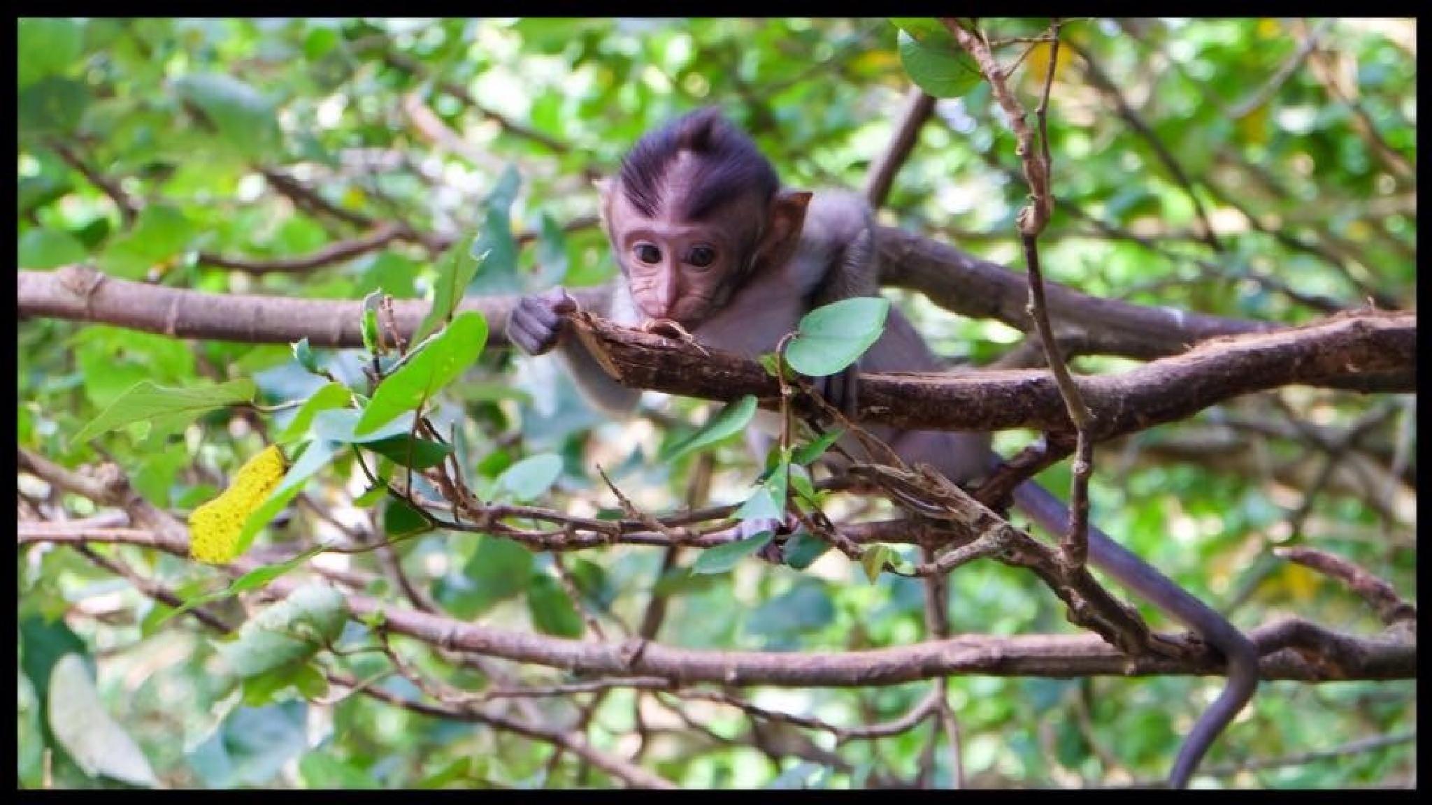 Cheeky Monkey by Magda Swiba