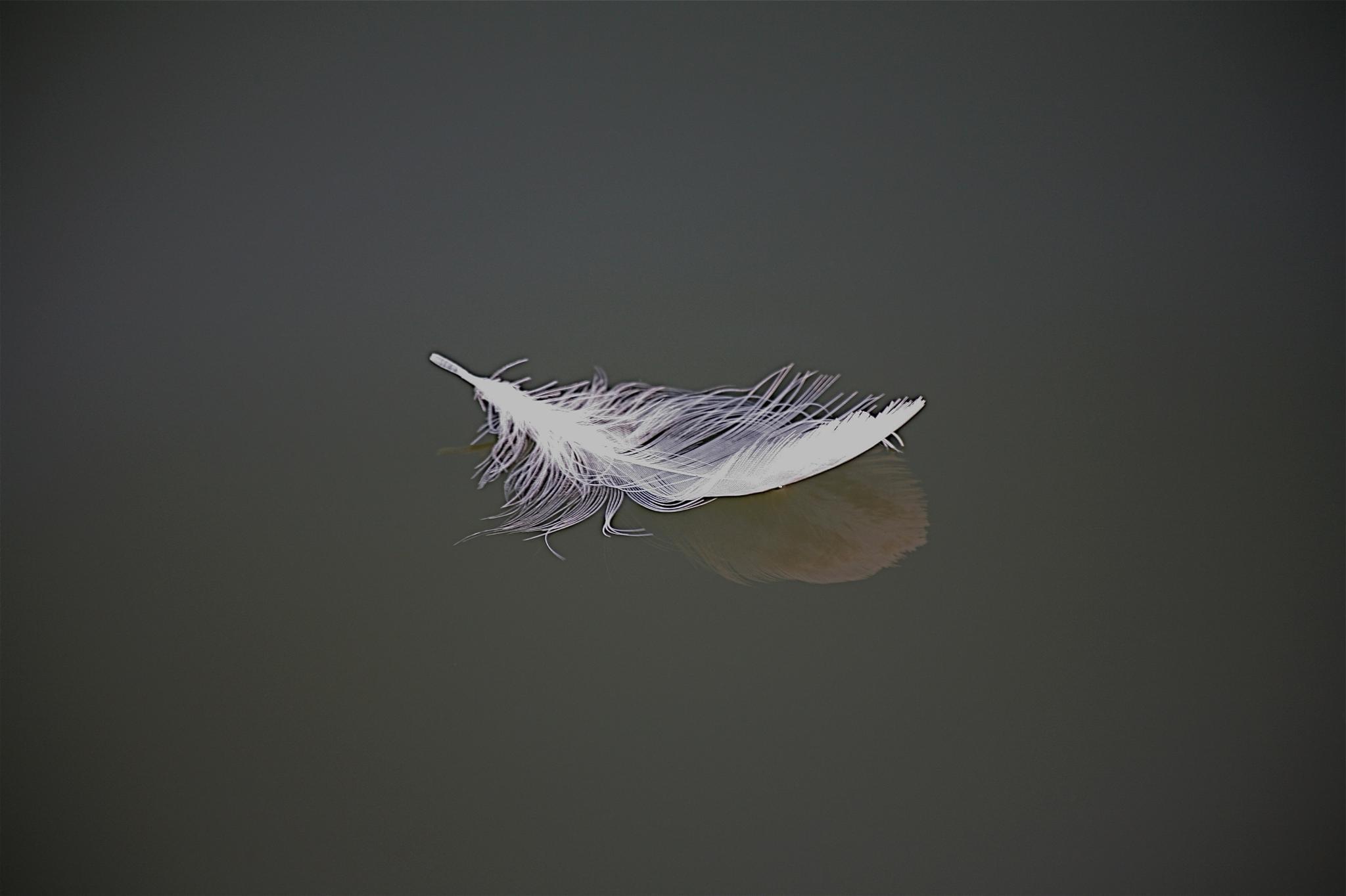 Light As A Feather by Morten Vilhelm Keller