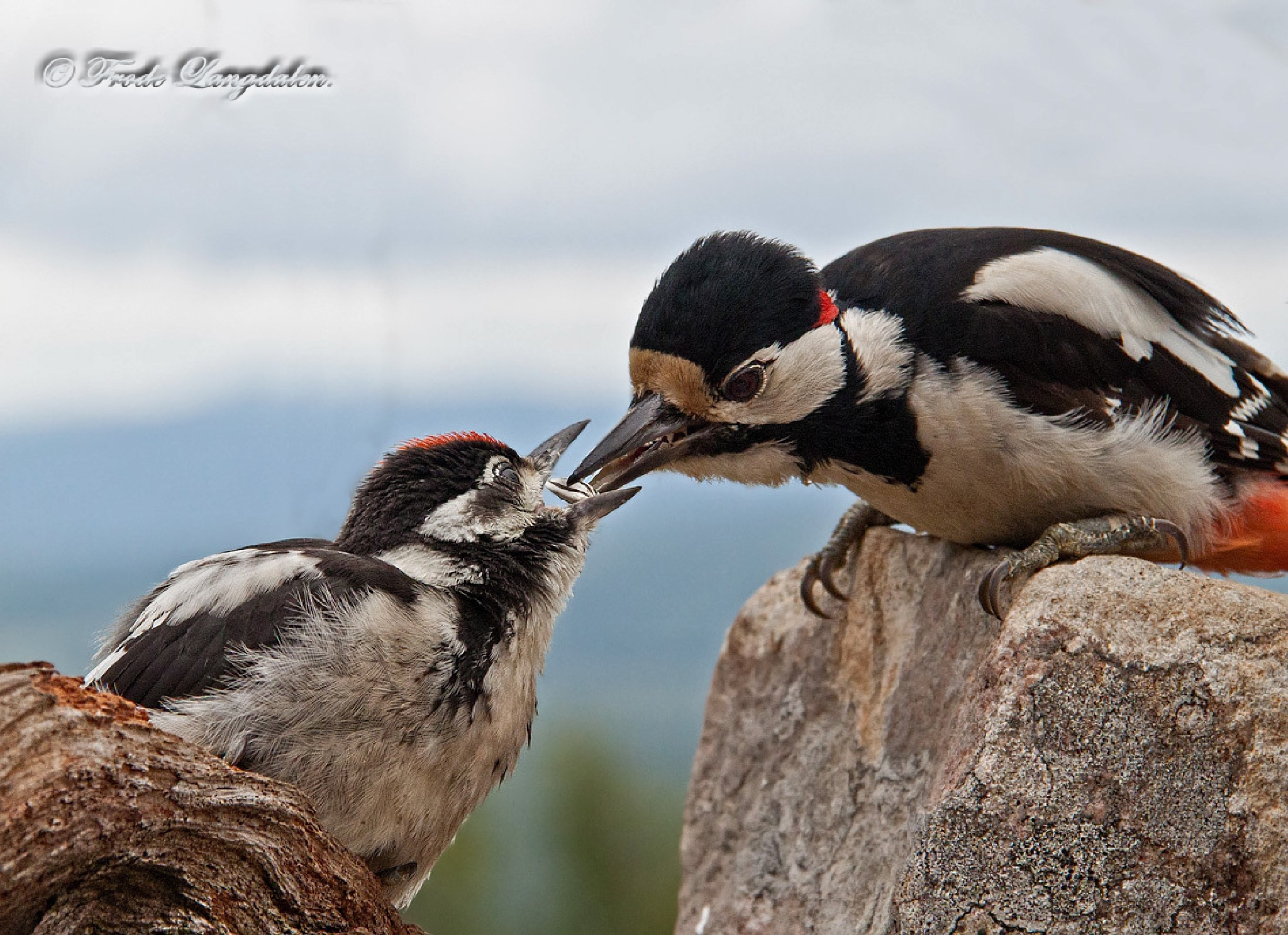 Dinner time. by Frode Langdalen.