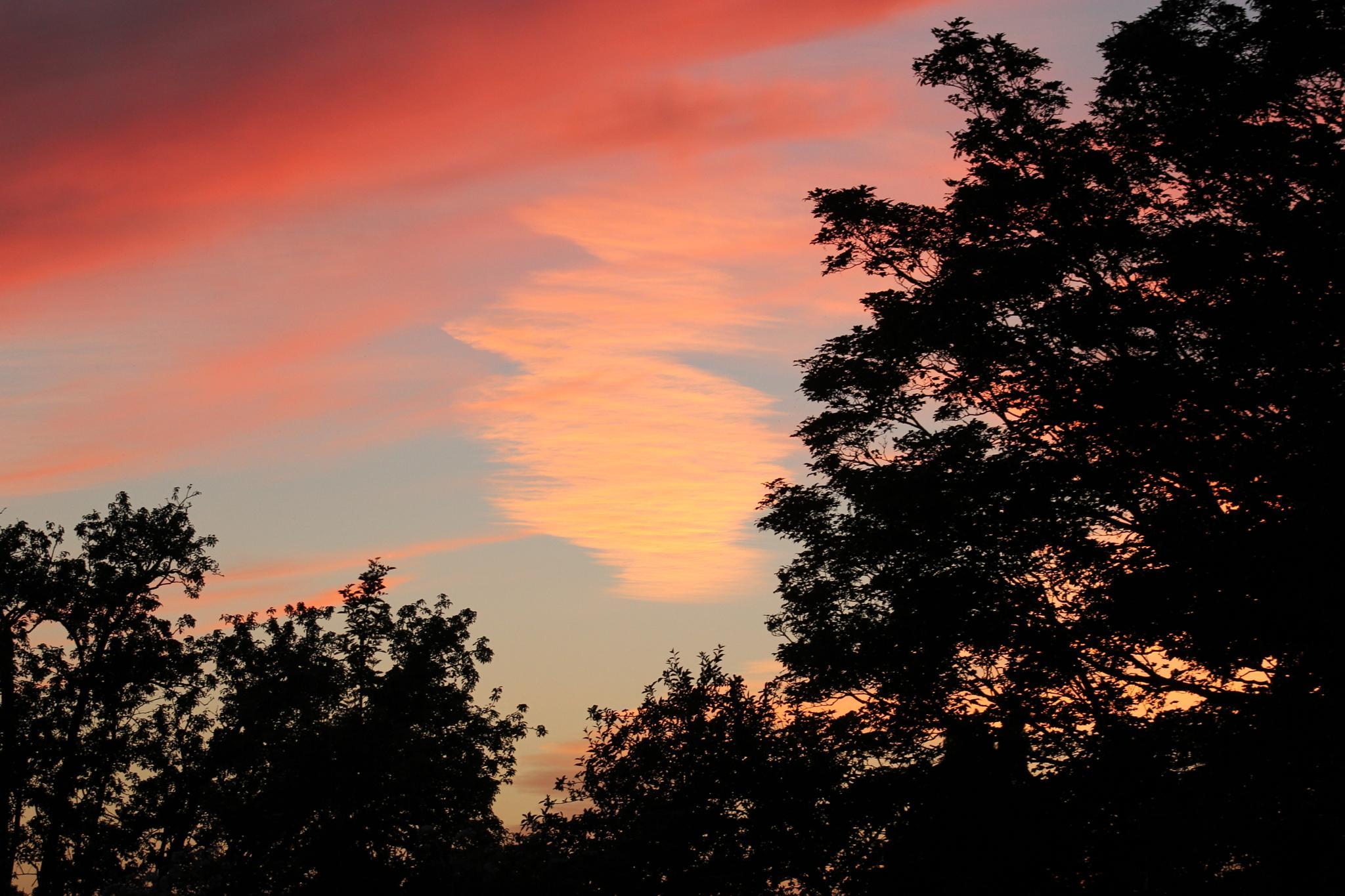 Evening by Sarah Hosking