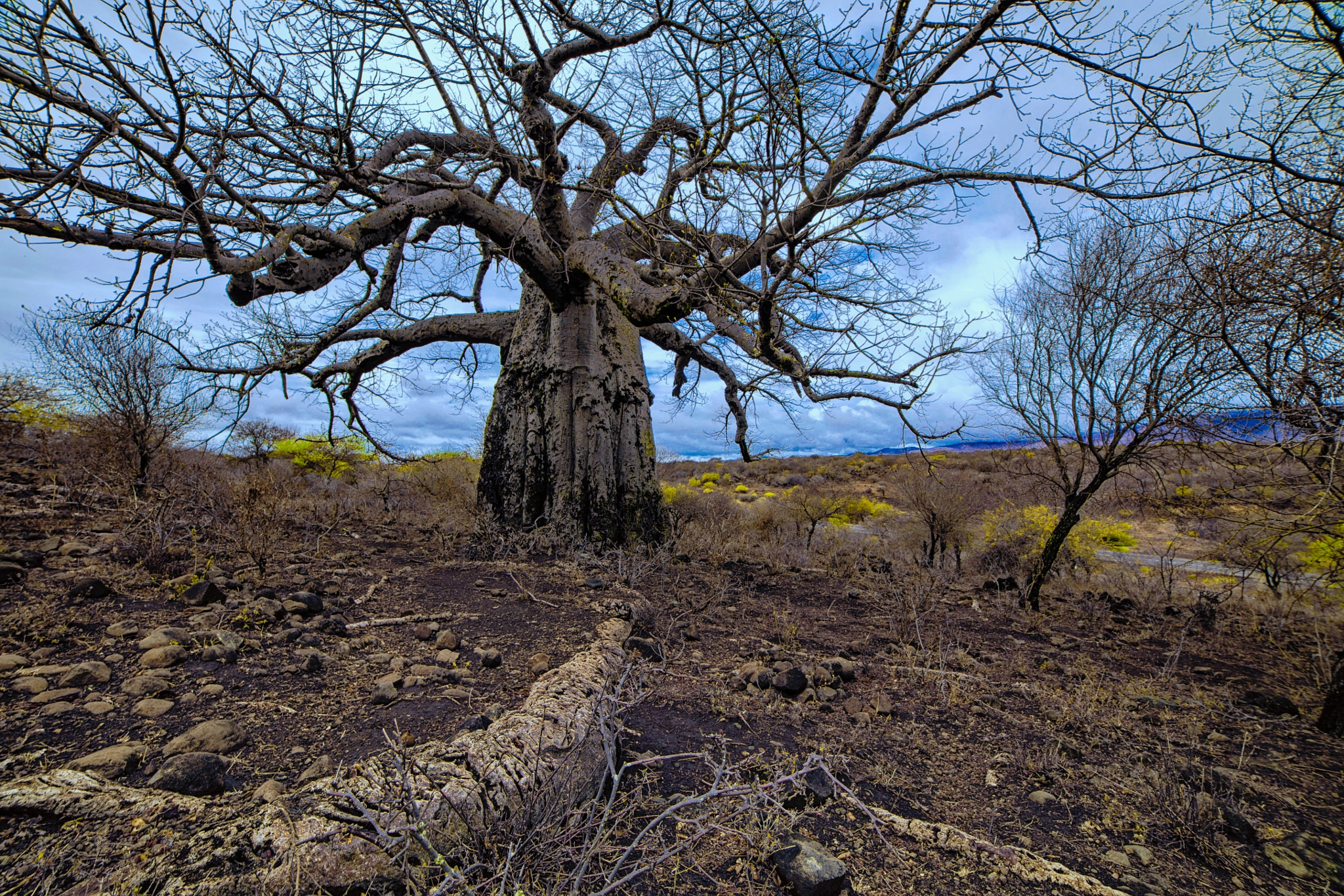 The tree of life by andré figueiredo
