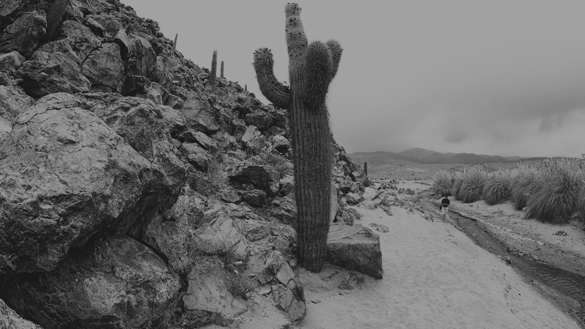 amazing huge cactus by andré figueiredo