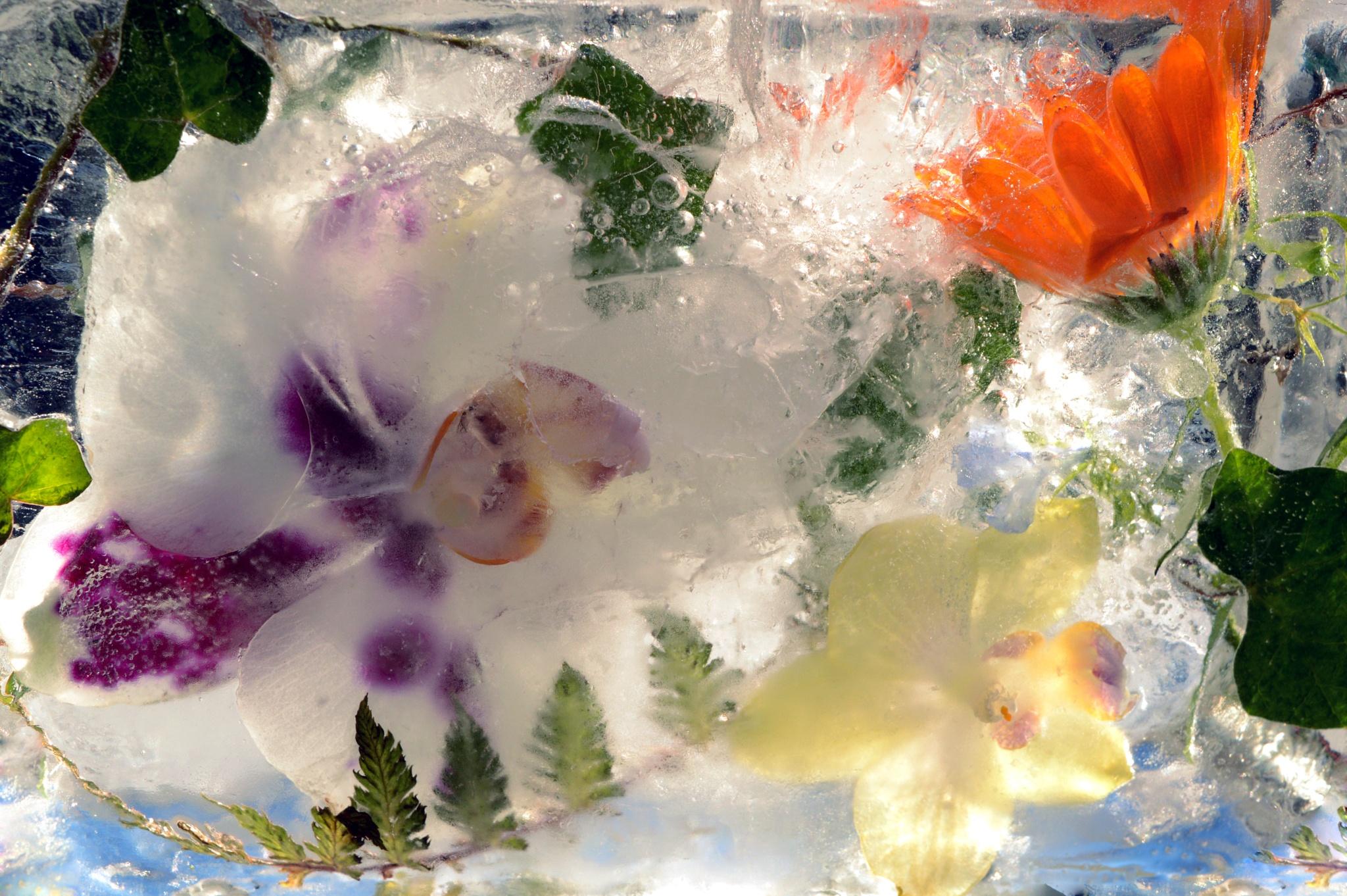 Flowers in ice by olga.weston