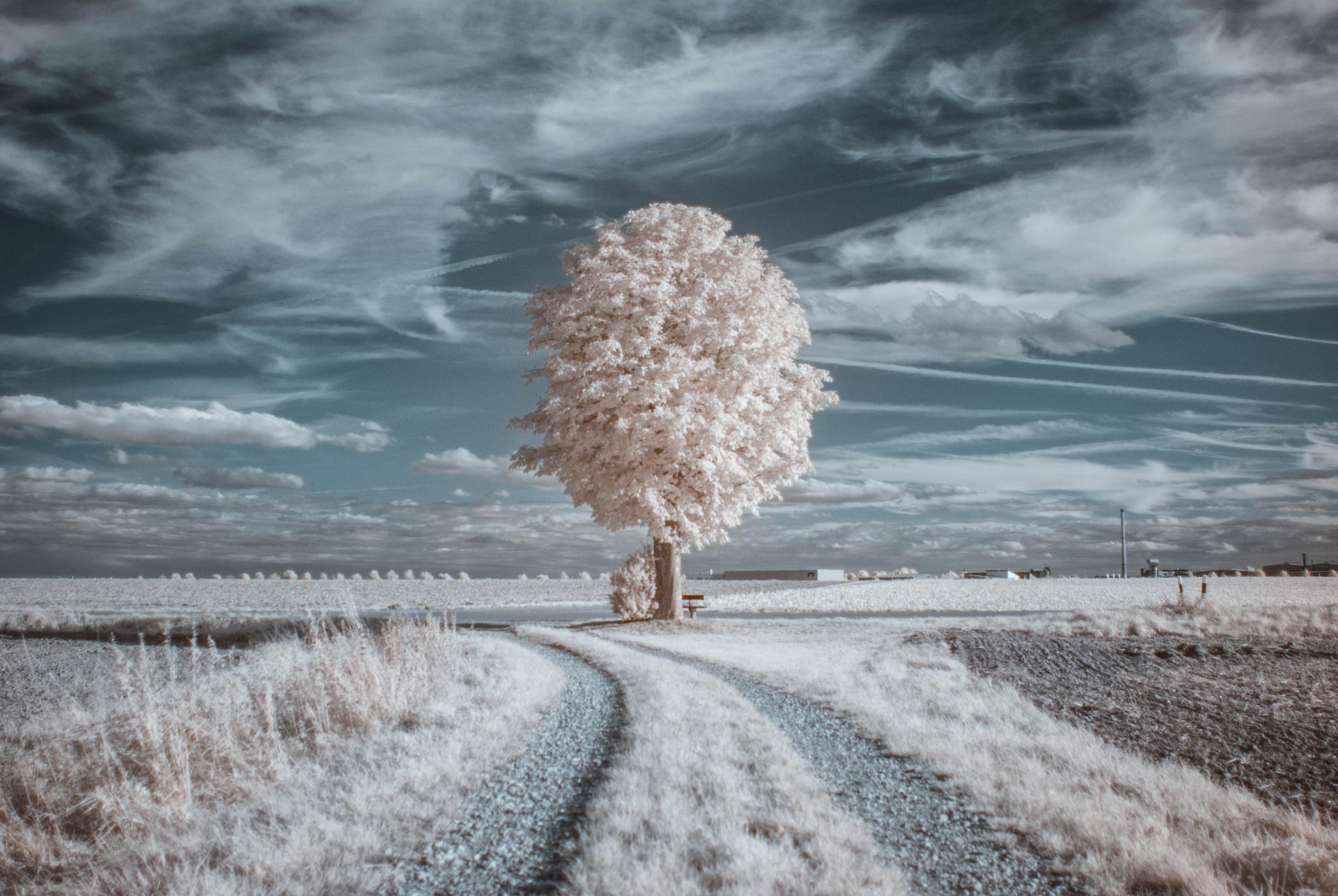 Lonely chestnut tree (IR,720nm)  by FalcoM