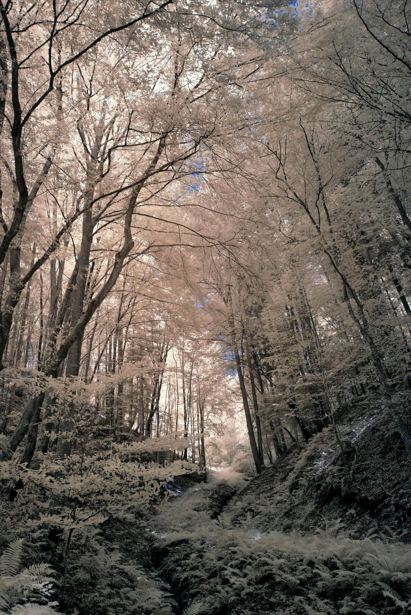 To the Light (IR,590nm) by FalcoM