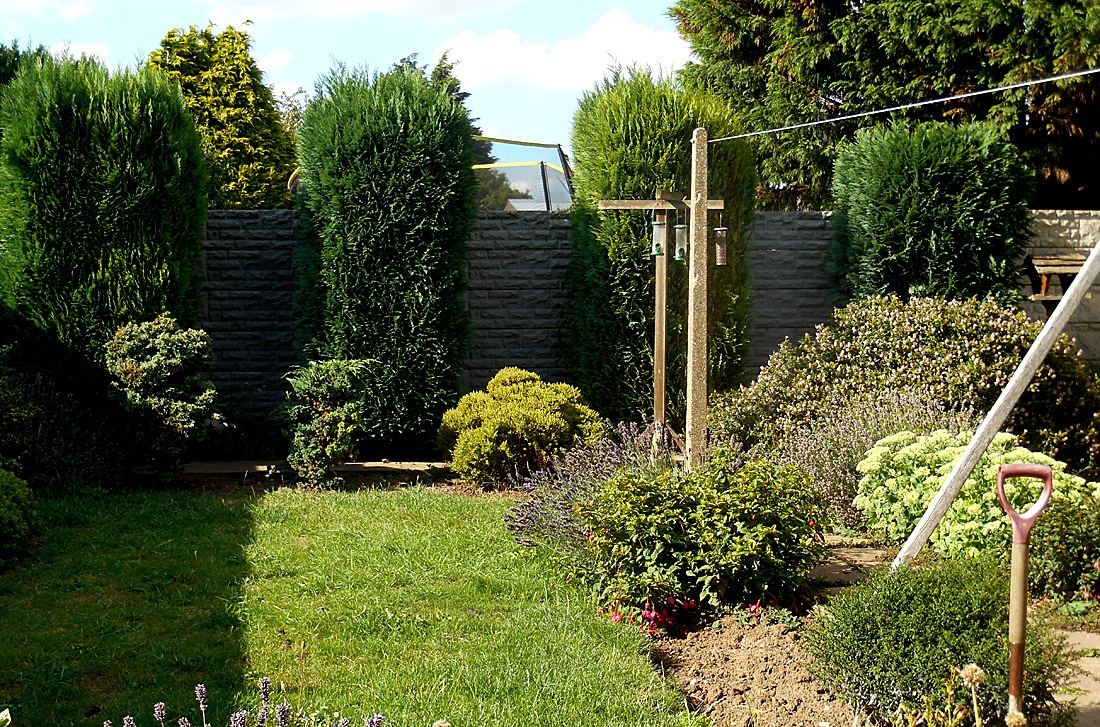 My Garden 38 'Trees ready for a trim' 01 August 2018.jpg by Owen Smithers