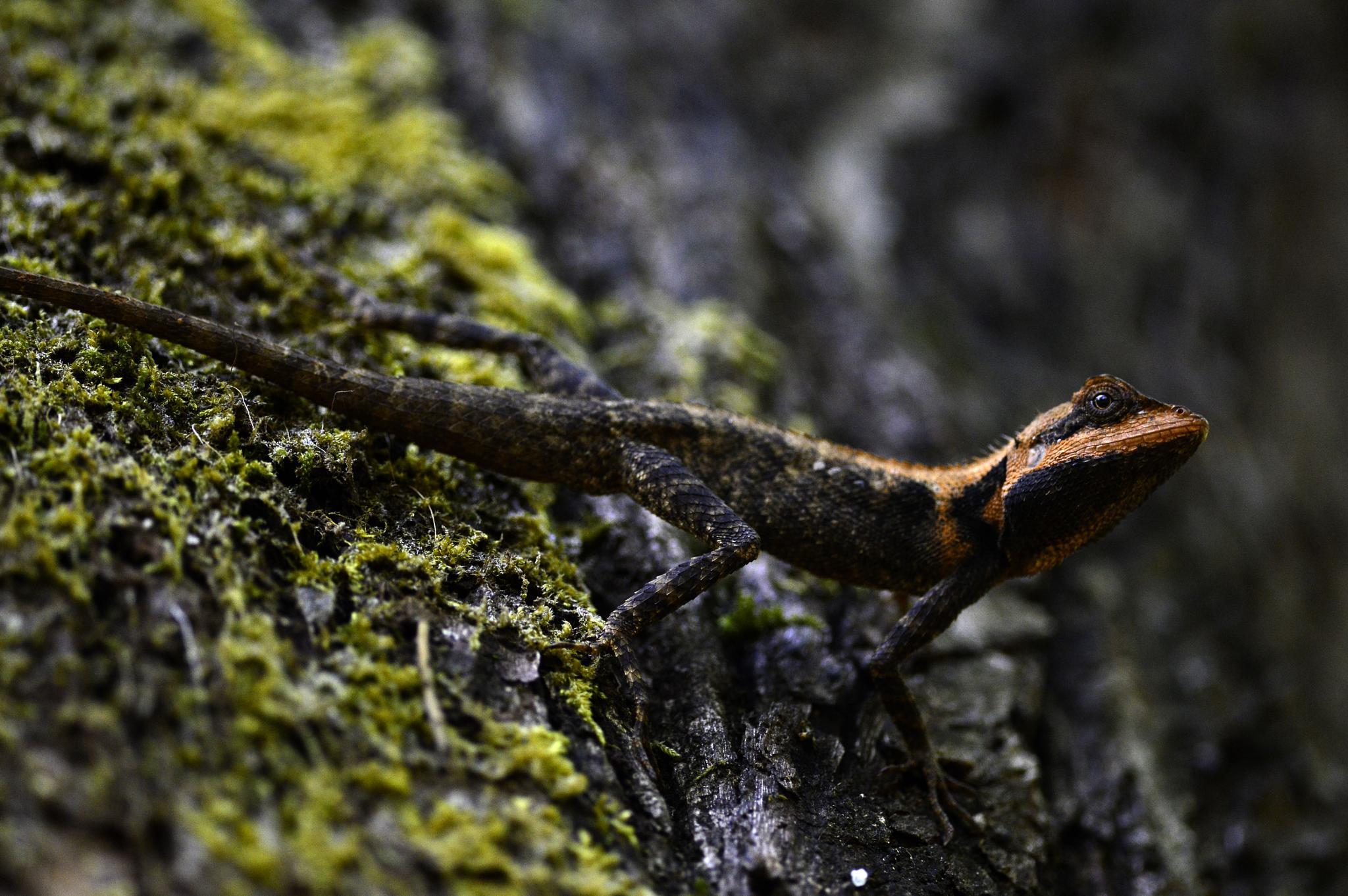 lizard by vasi23