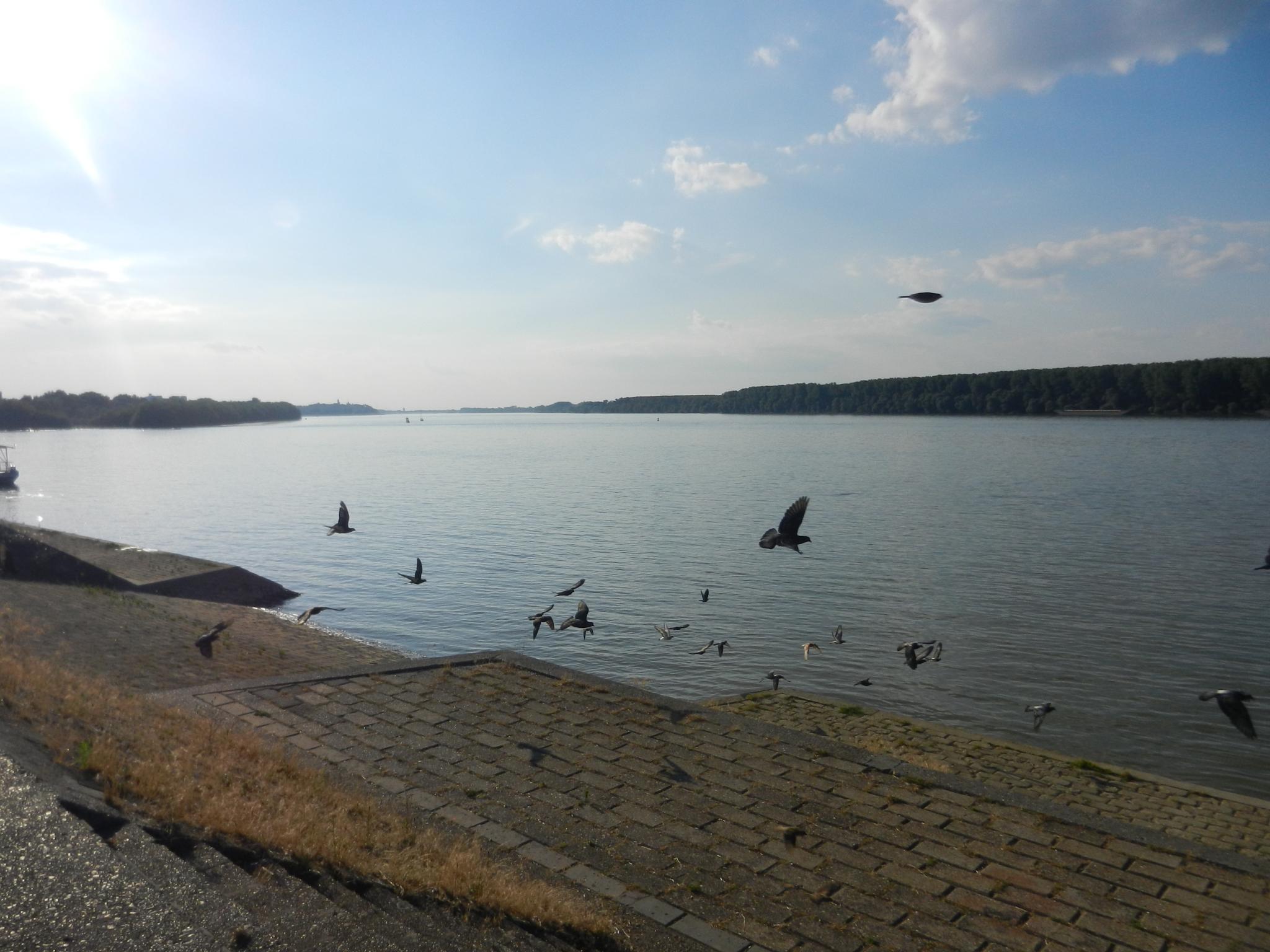 BIRDS AT THE DUNAV IN BELGRADE by Dbmt99