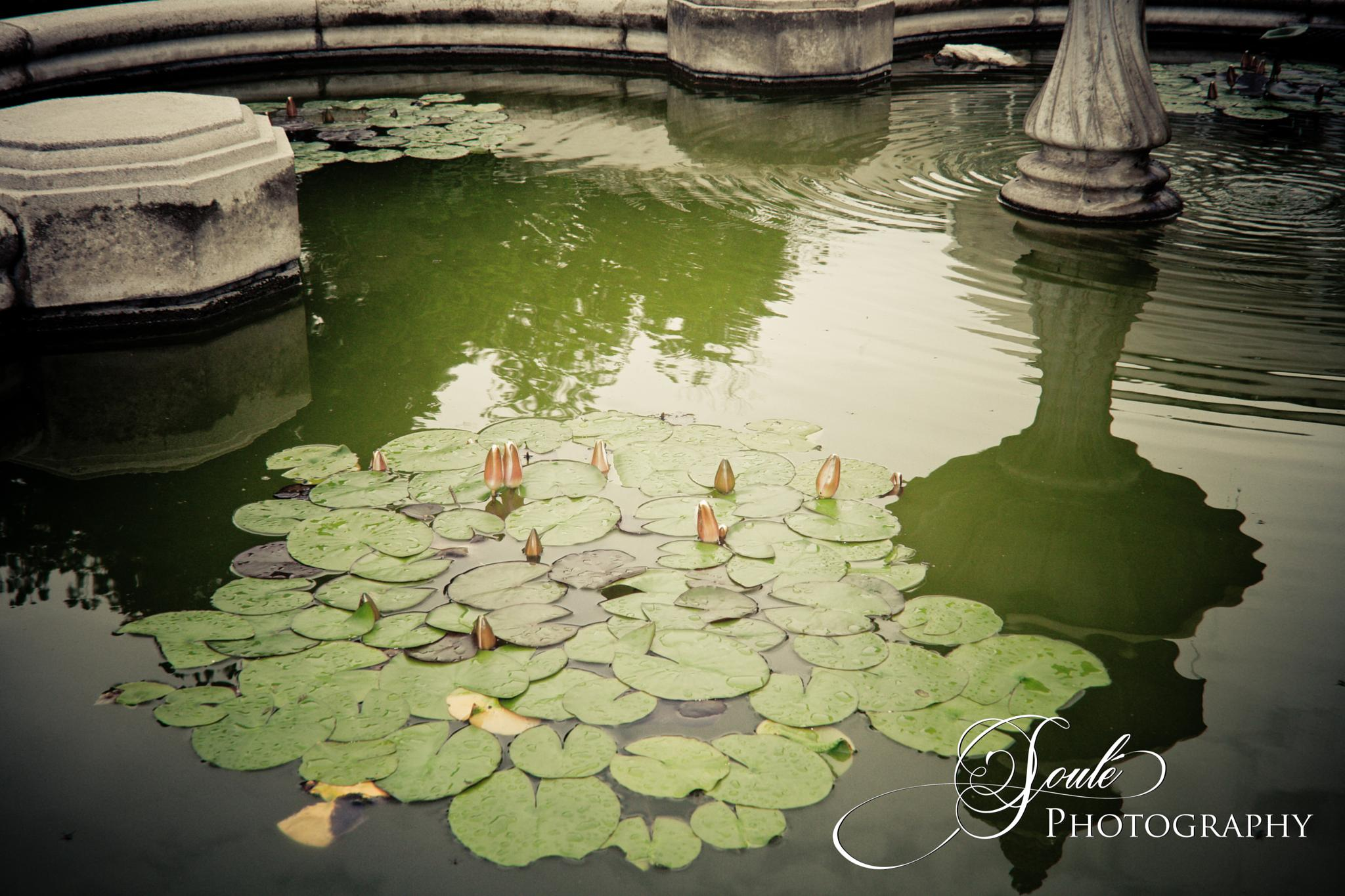 Lilly Pad Fountain by Brent Soule