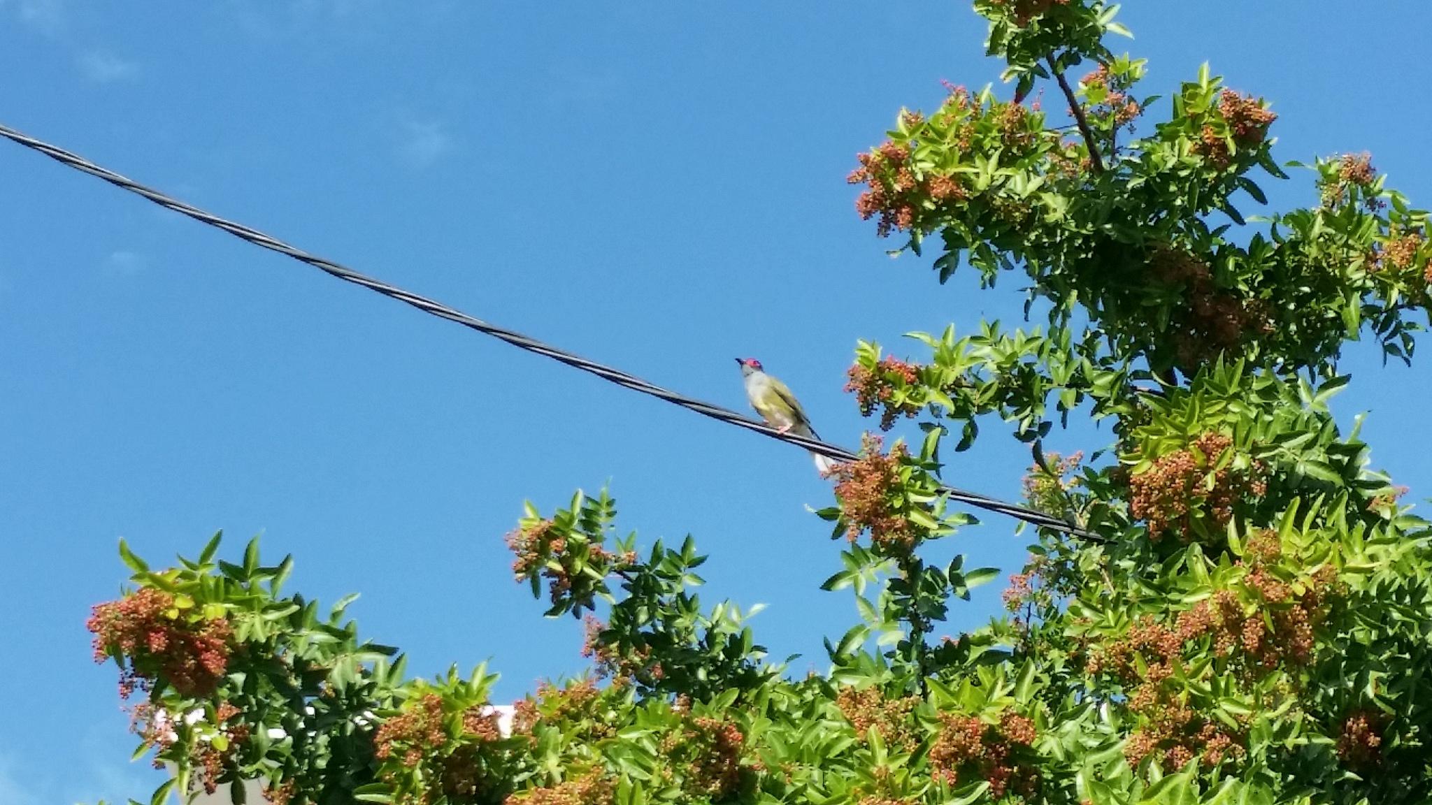 Little bird above.  by Michael De St Pern