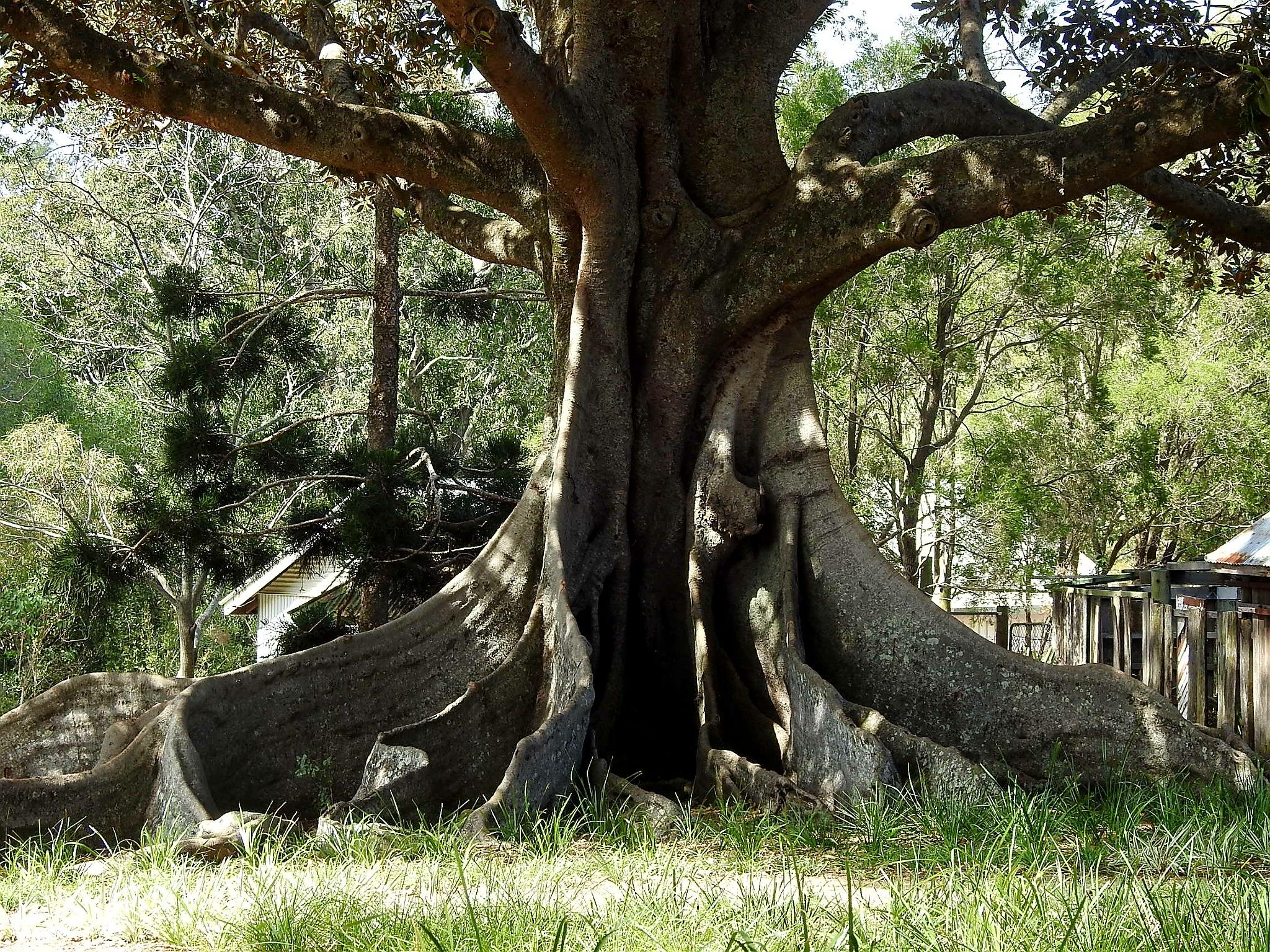 Old tree trunk. by Michael De St Pern