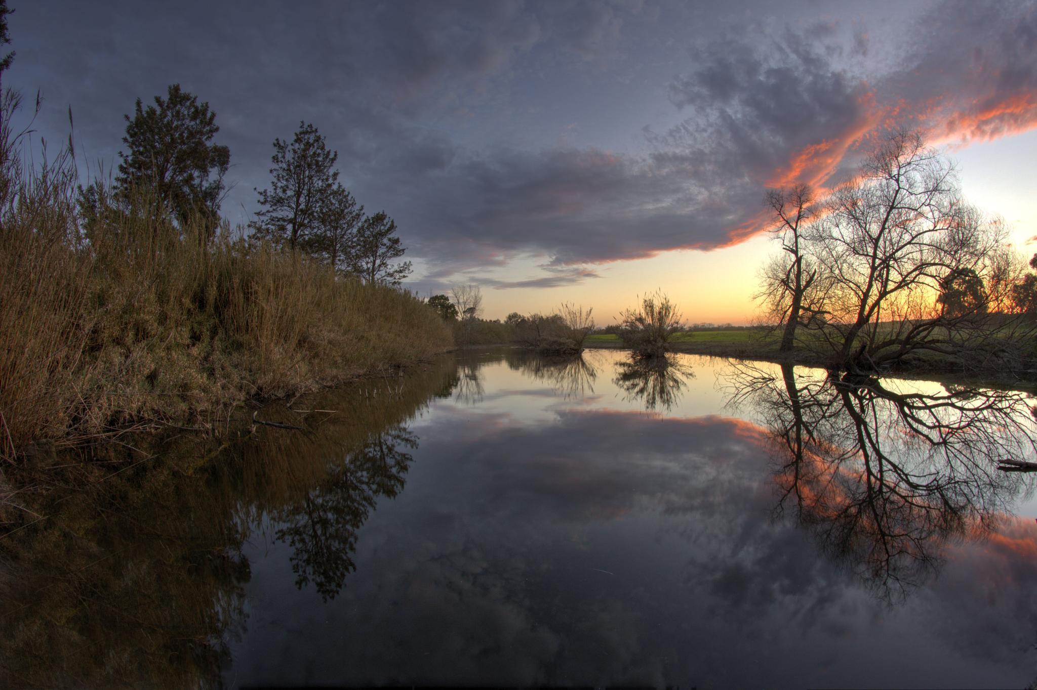 Phoenix Setting. by darrell williams