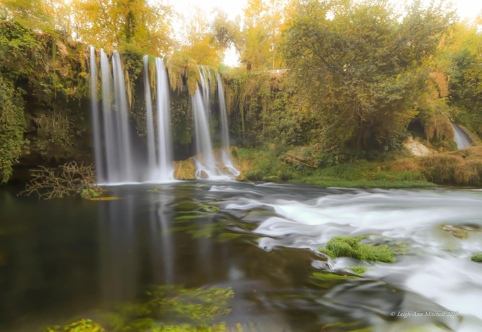 Autumn Falls by Leigh-Ann Mitchell