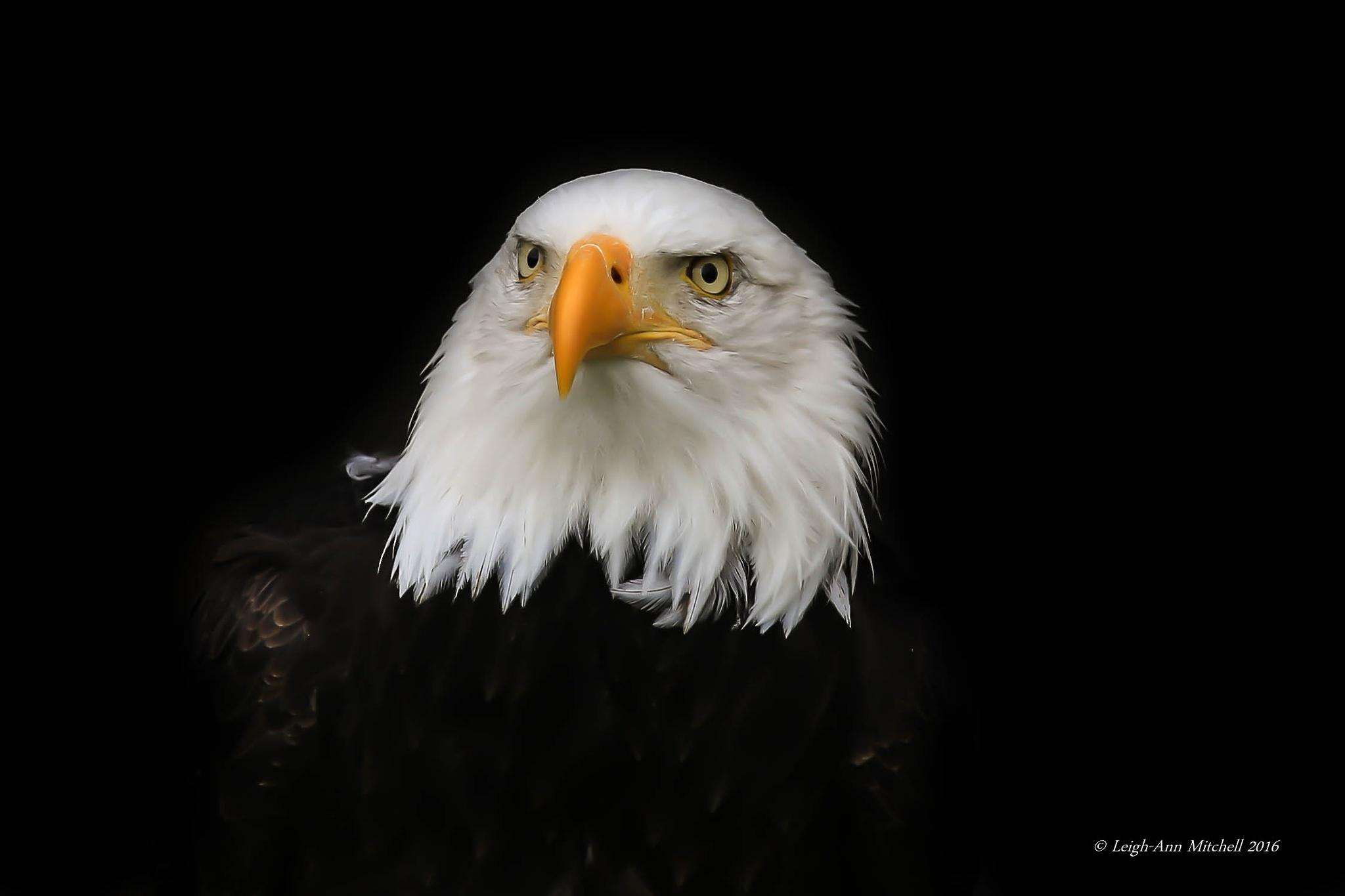 EAGLE EYES by Leigh-Ann Mitchell
