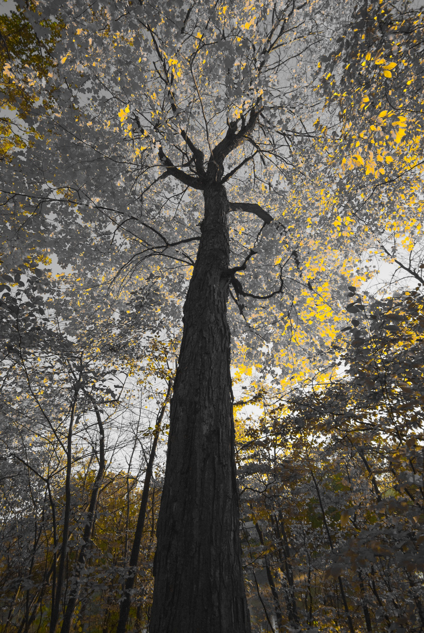 Autumn Art by Eugenie Robitaille