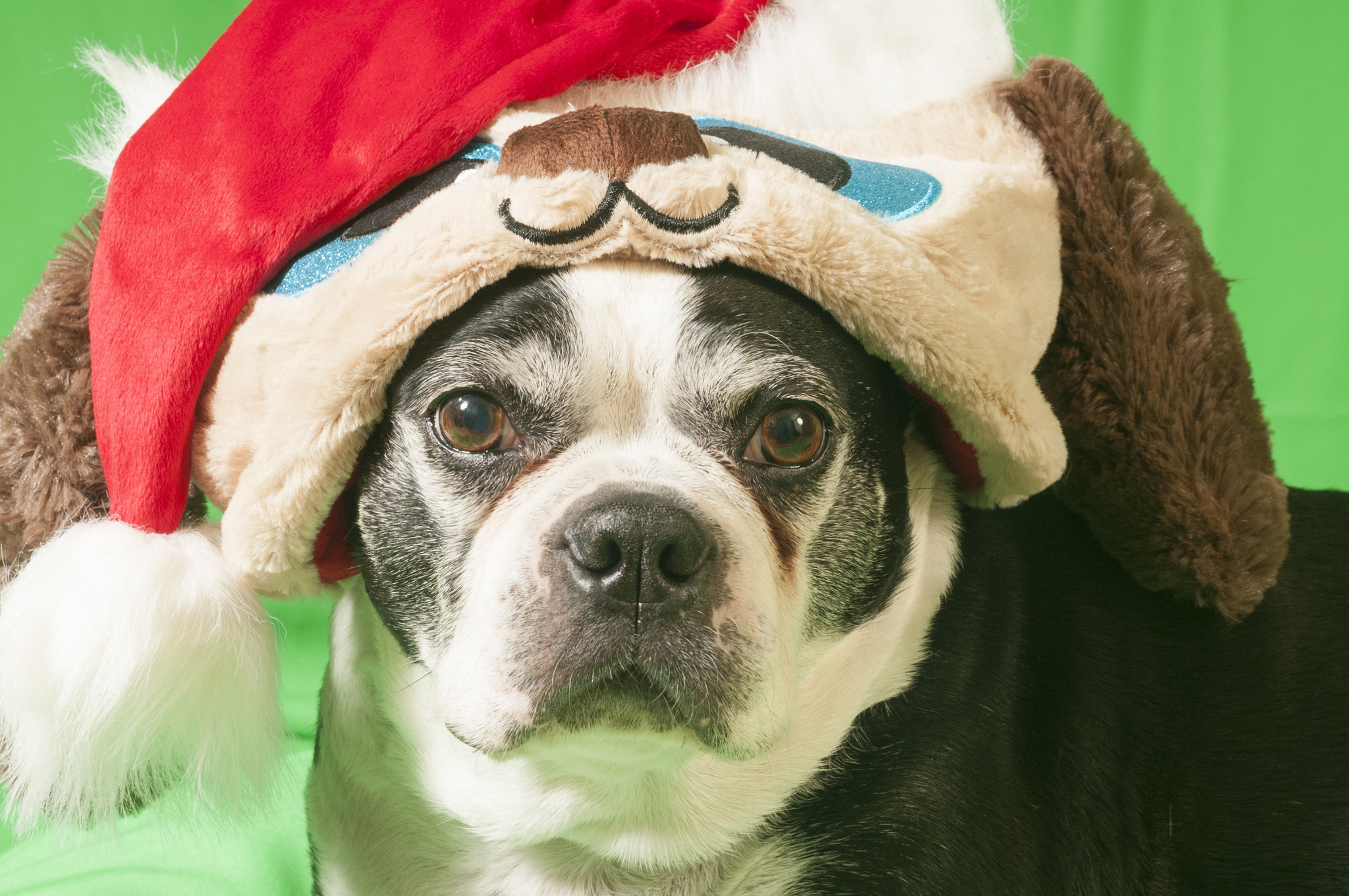 Holiday Dog by Eugenie Robitaille
