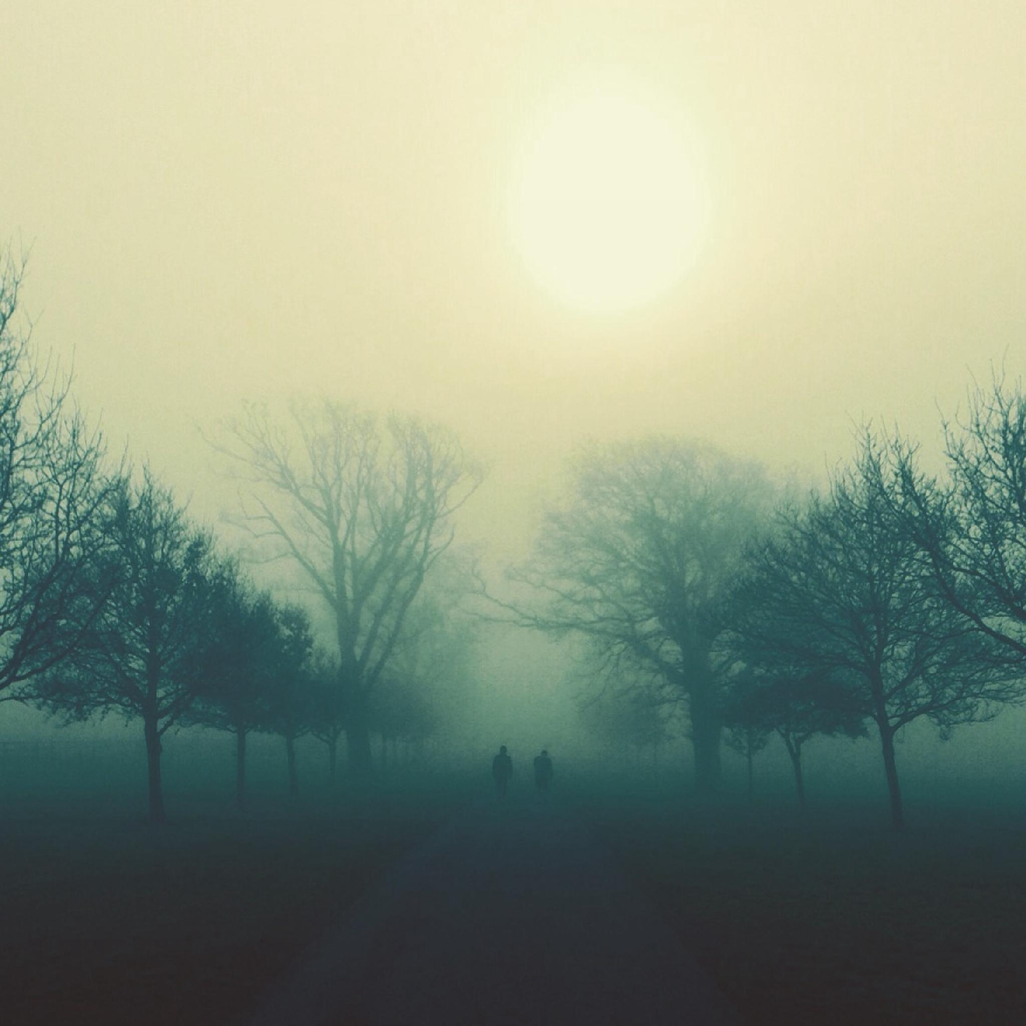 Early morning misty walk in the park by fionagill8639