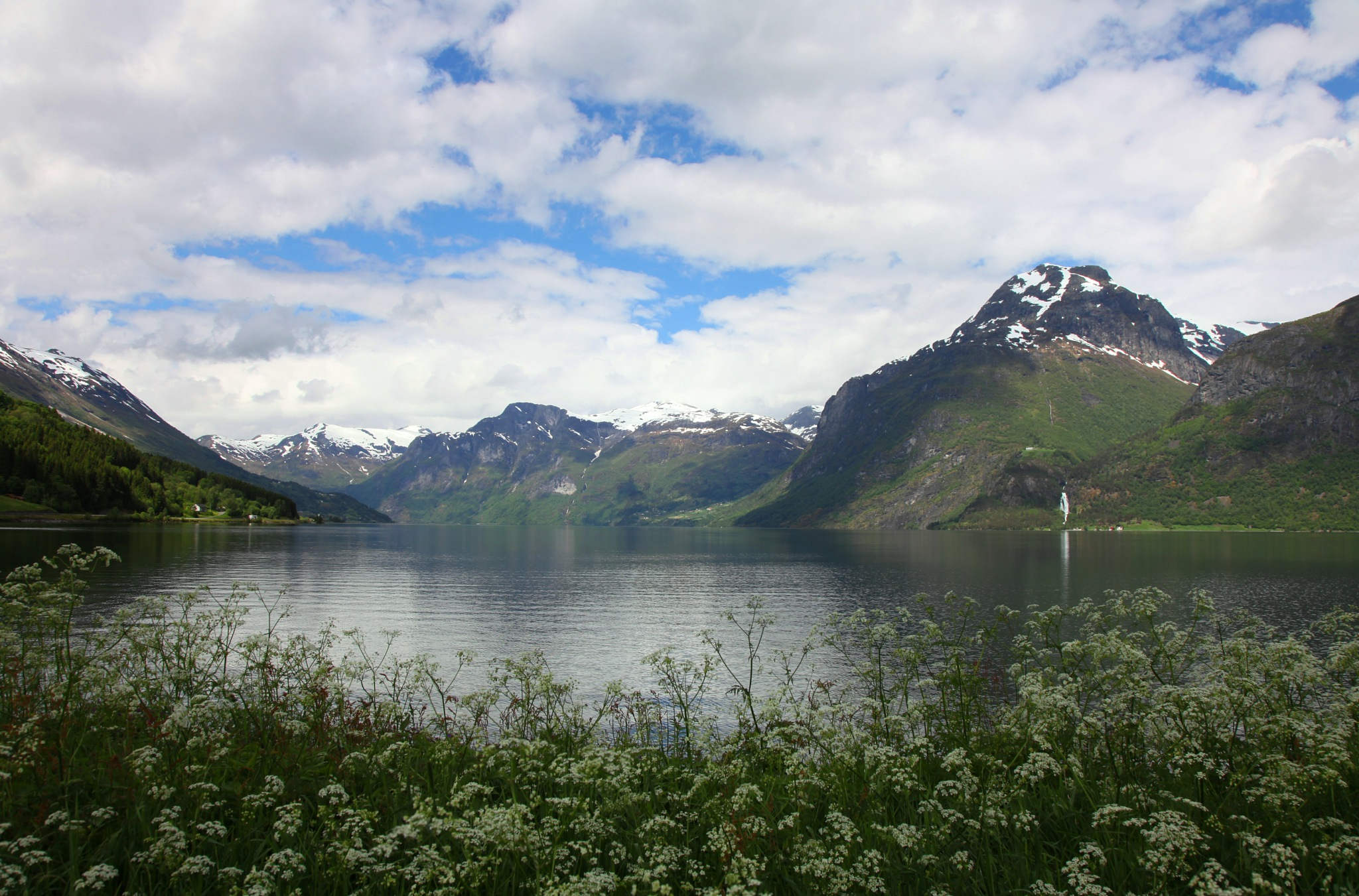 A Blooming Fjord by basel.badran