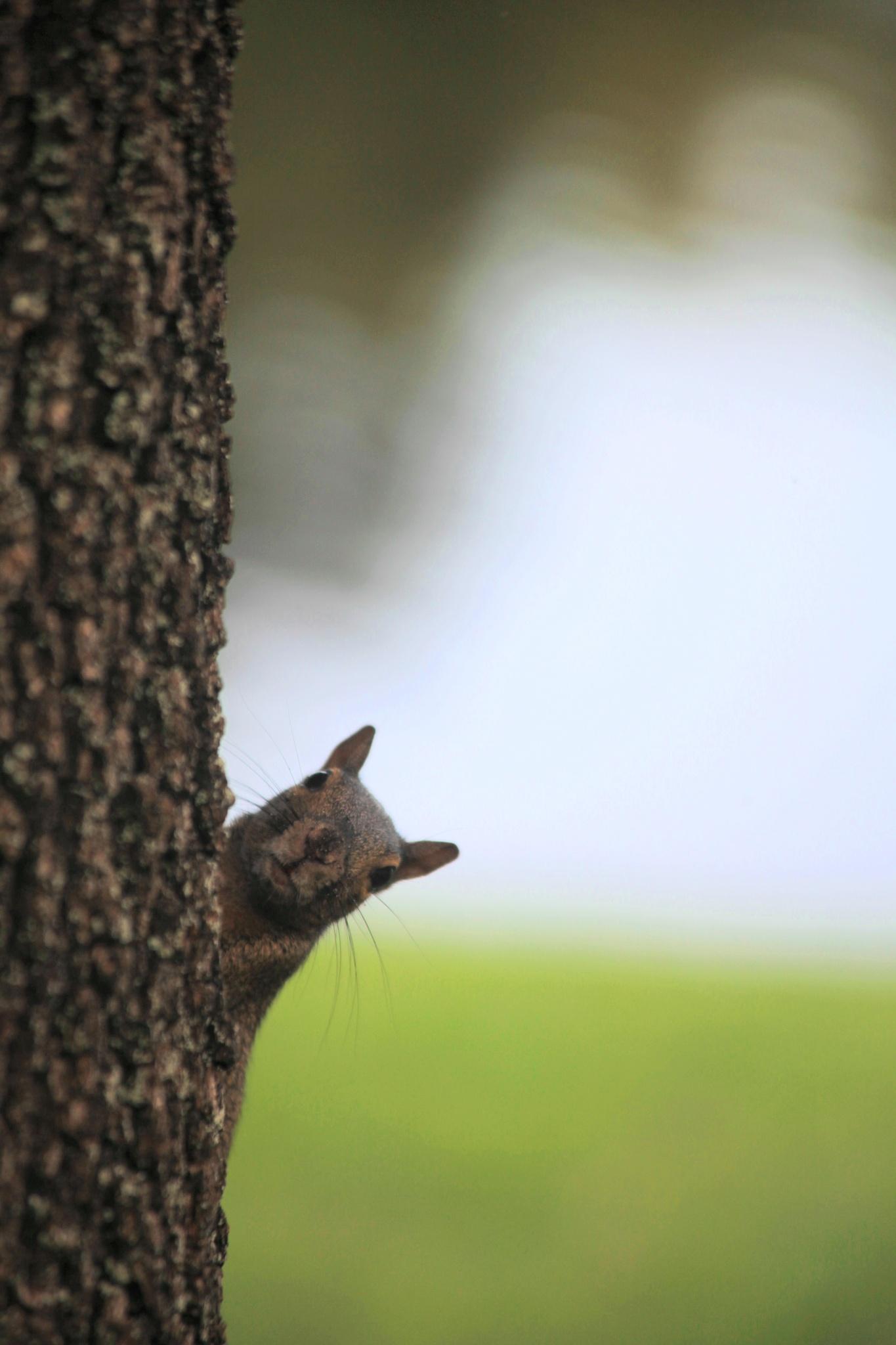 Photo in Animal #squirrel #tree #basel badran