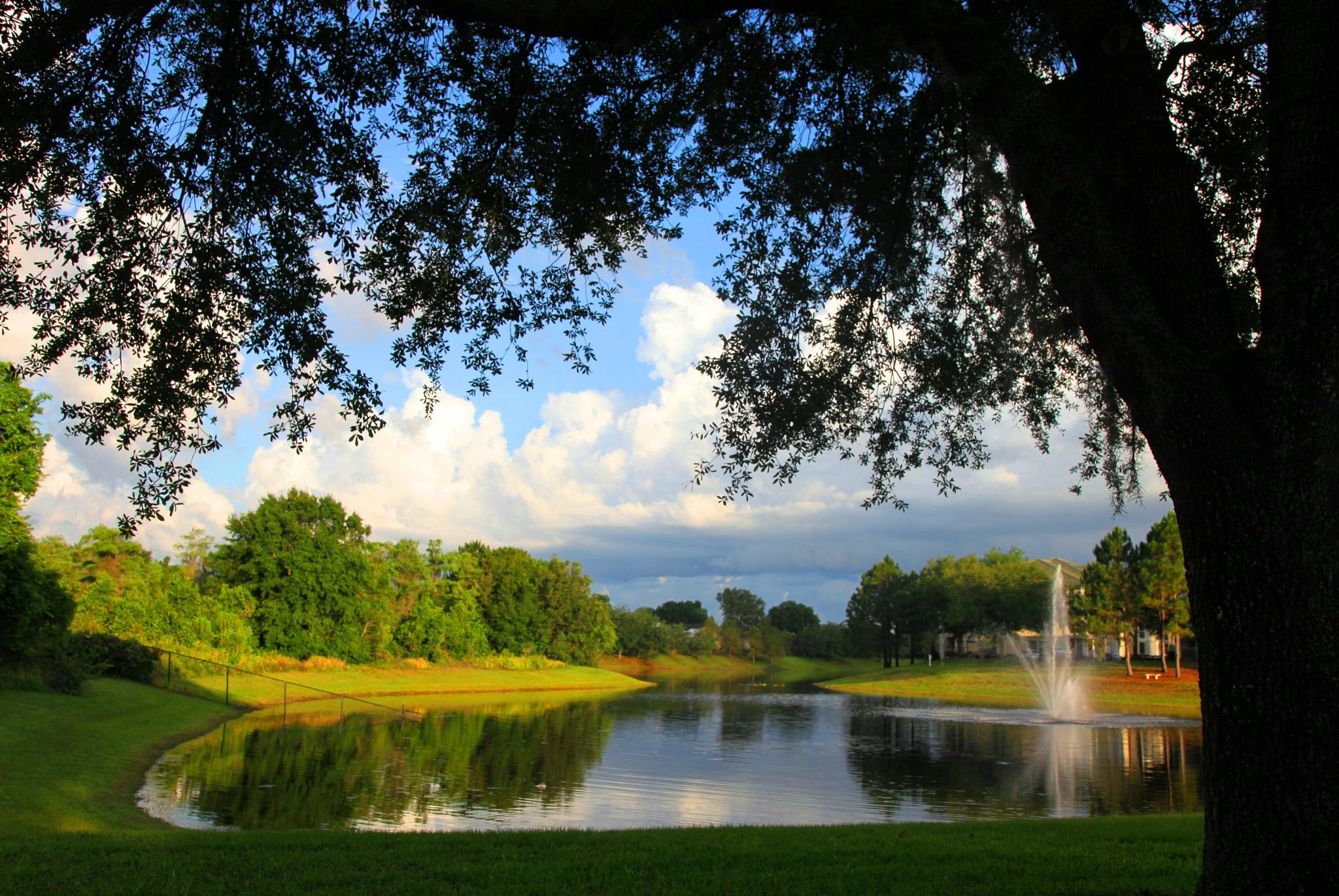 Photo in Landscape #pond #tree #basel badran