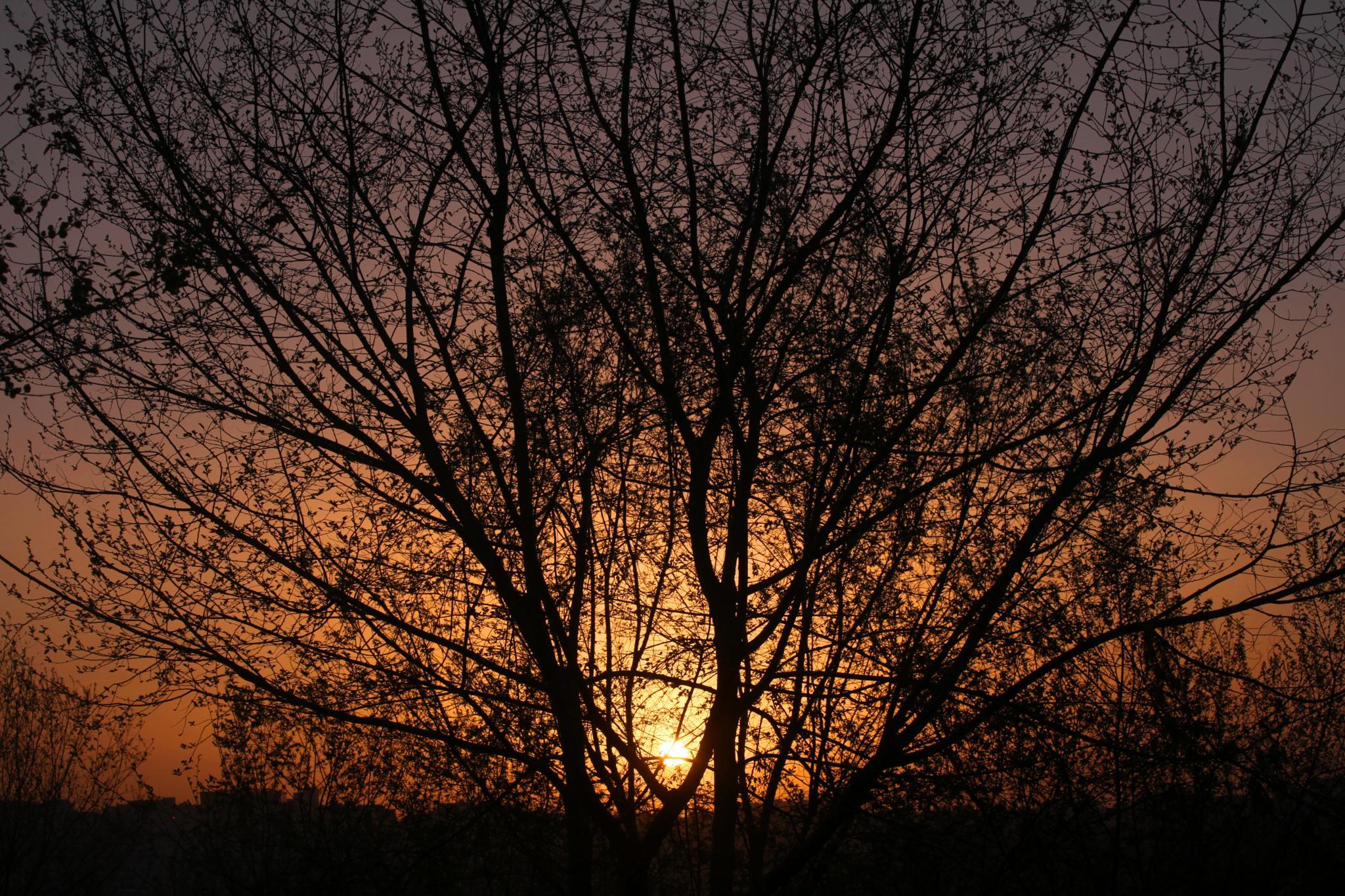 Sunrise in Jordan by basel.badran