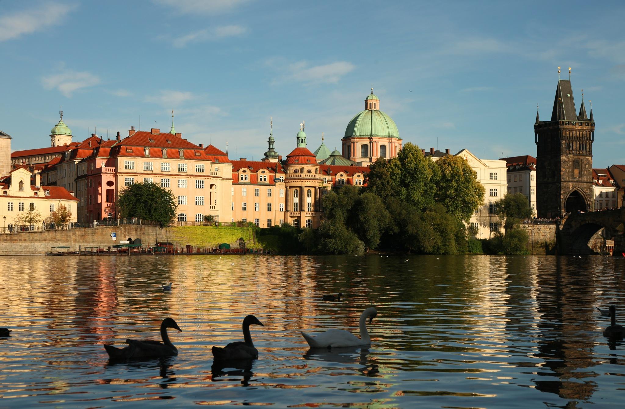 Czech the Swans! by basel.badran