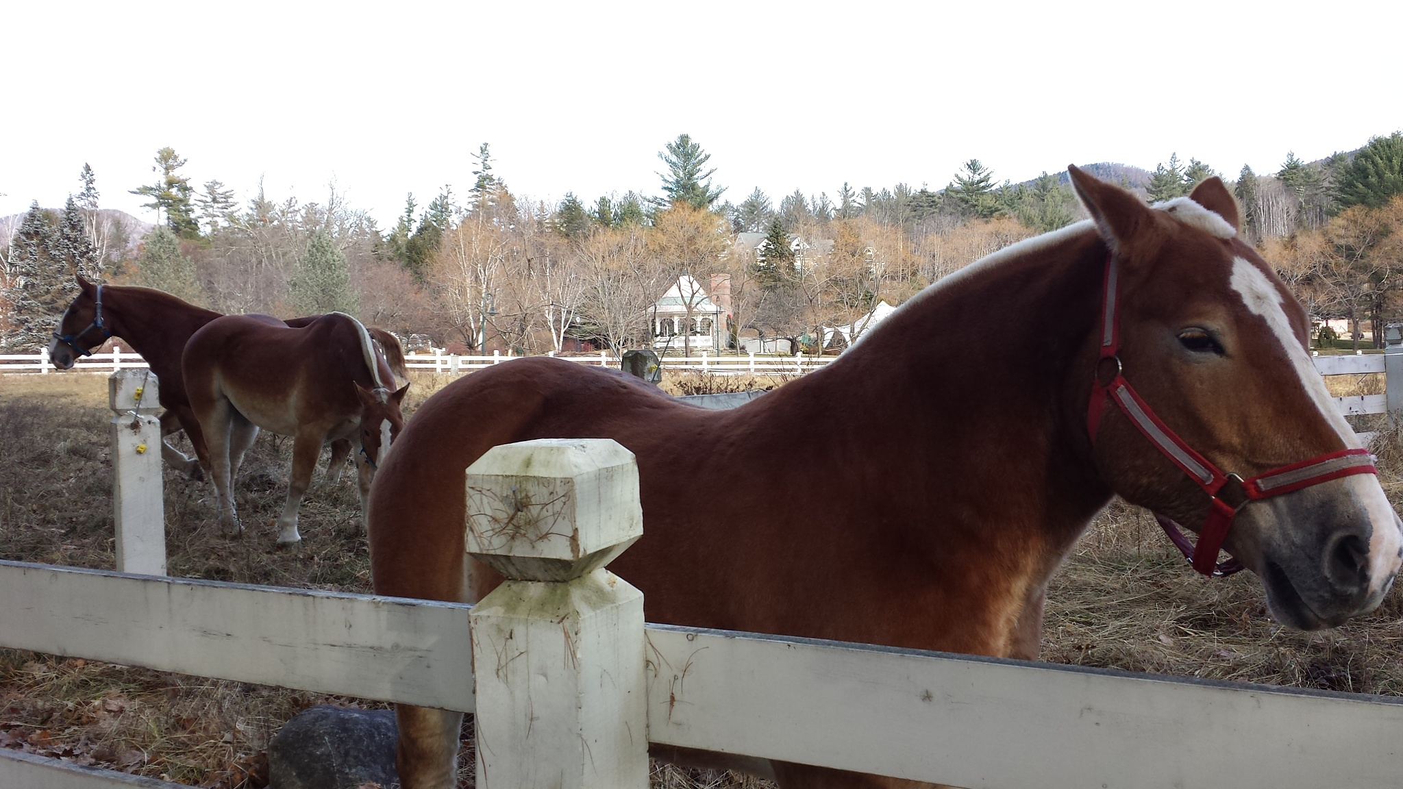 A Few Of The Horses... by Cary J.Casse