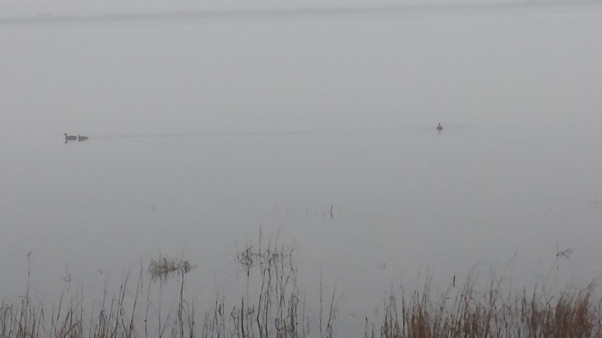 Dense Fog On The Flats... by Cary J.Casse