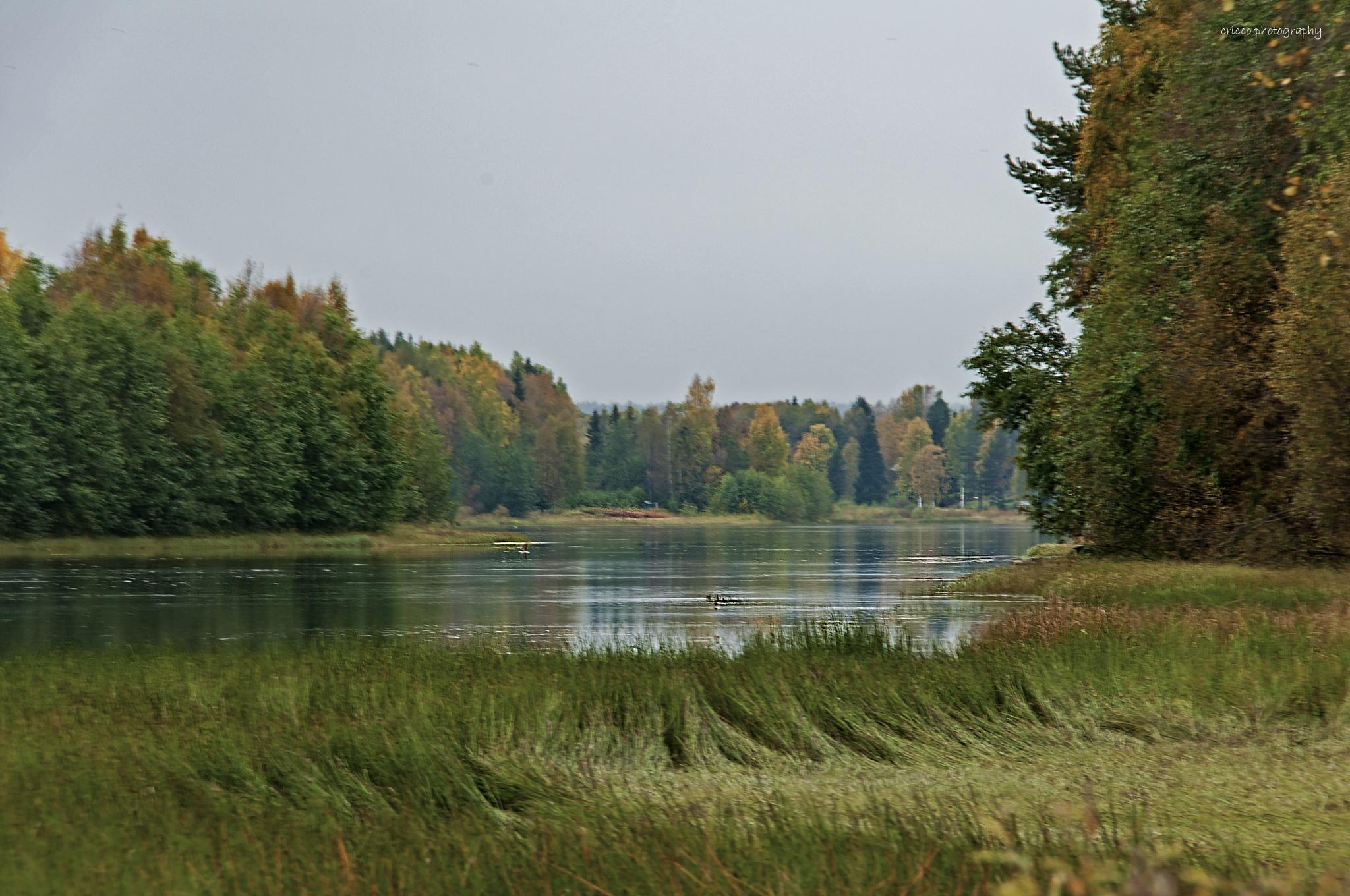 Fall by cricco photography