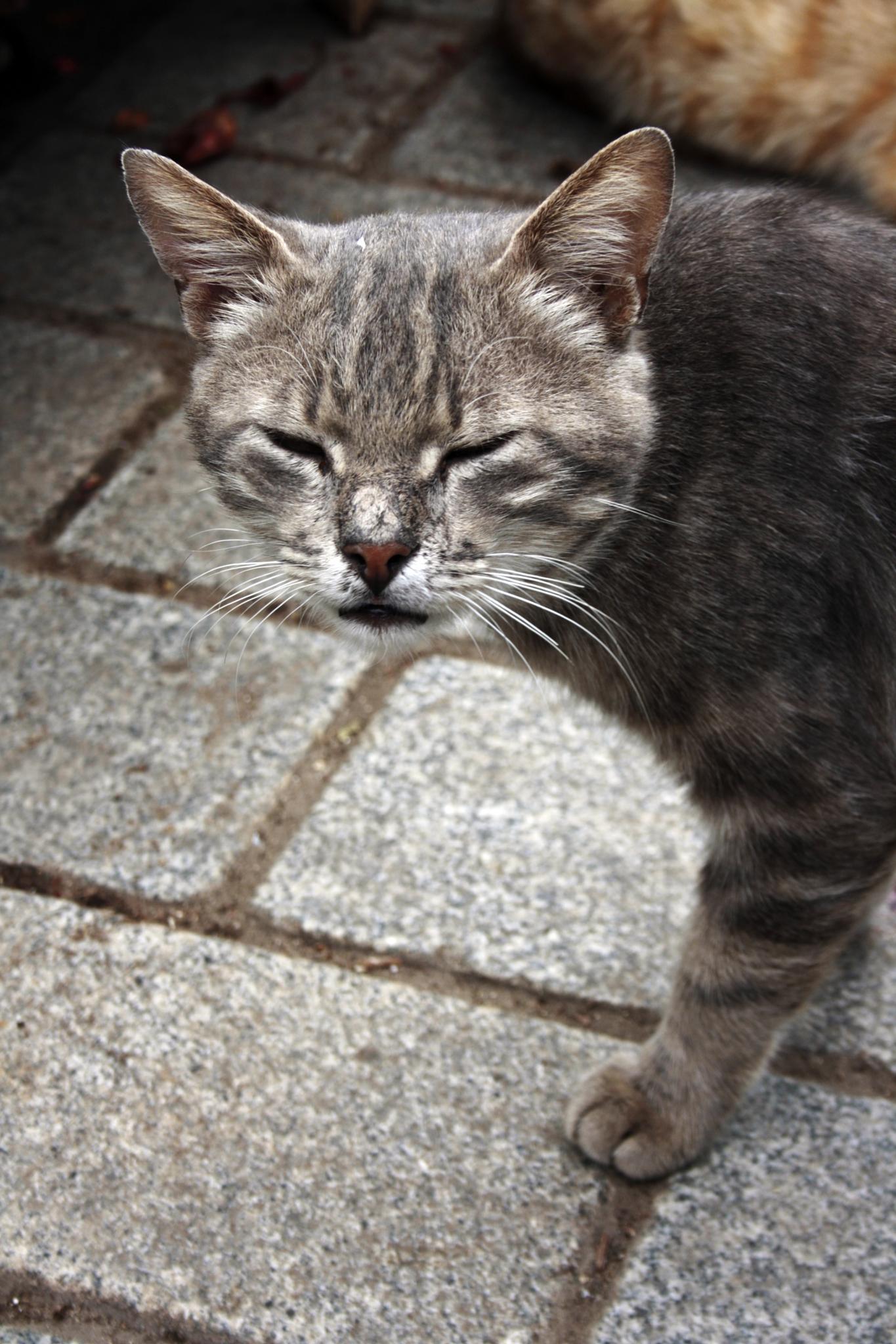 kedicik by NİL GÜLTEKİN