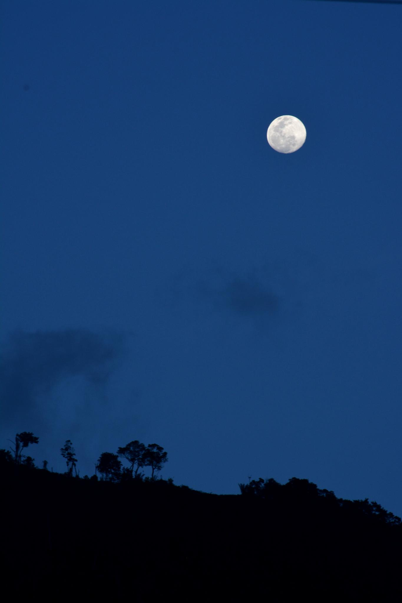 Blue Moon by laboisselle