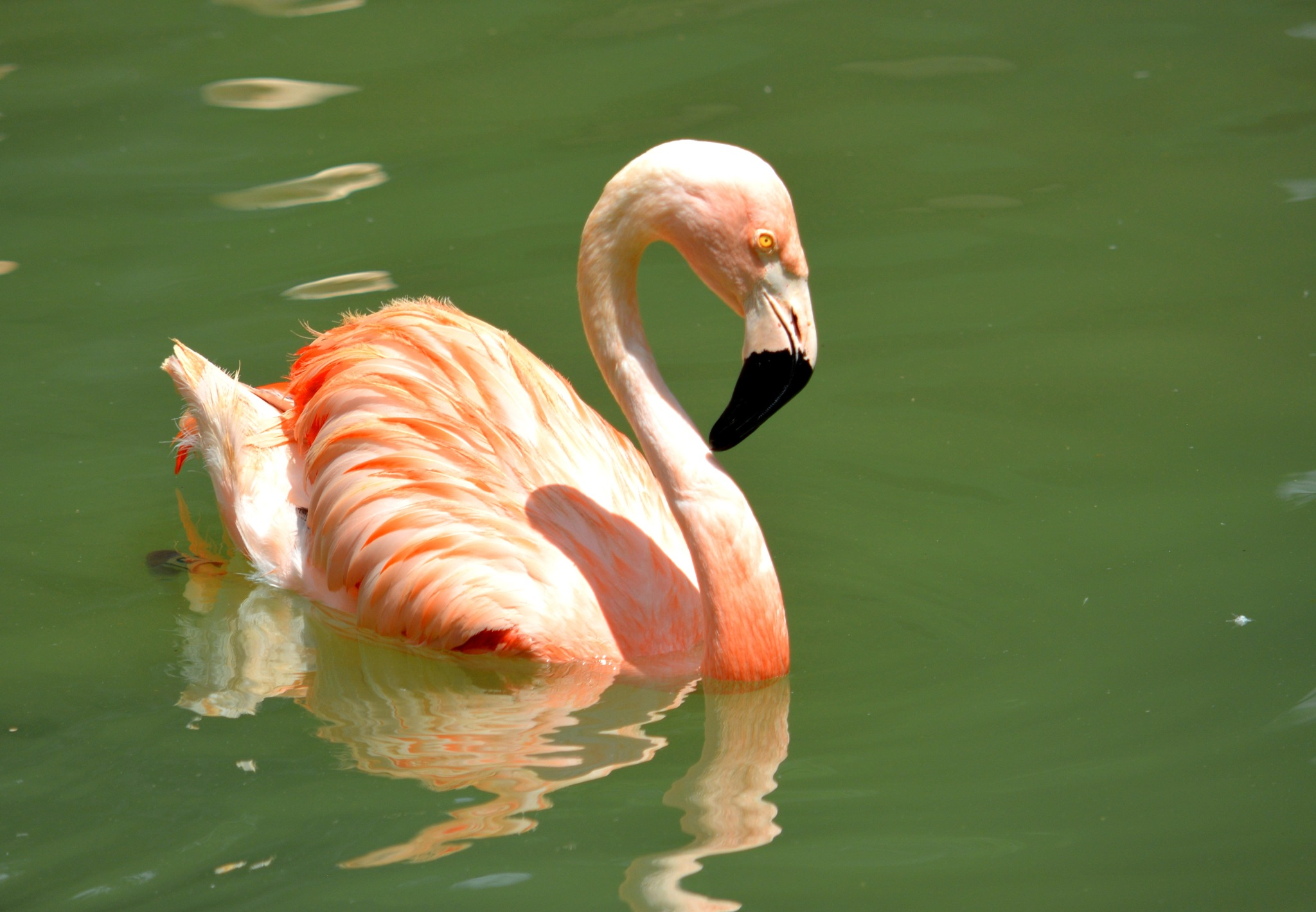 Pretty in pink by laboisselle