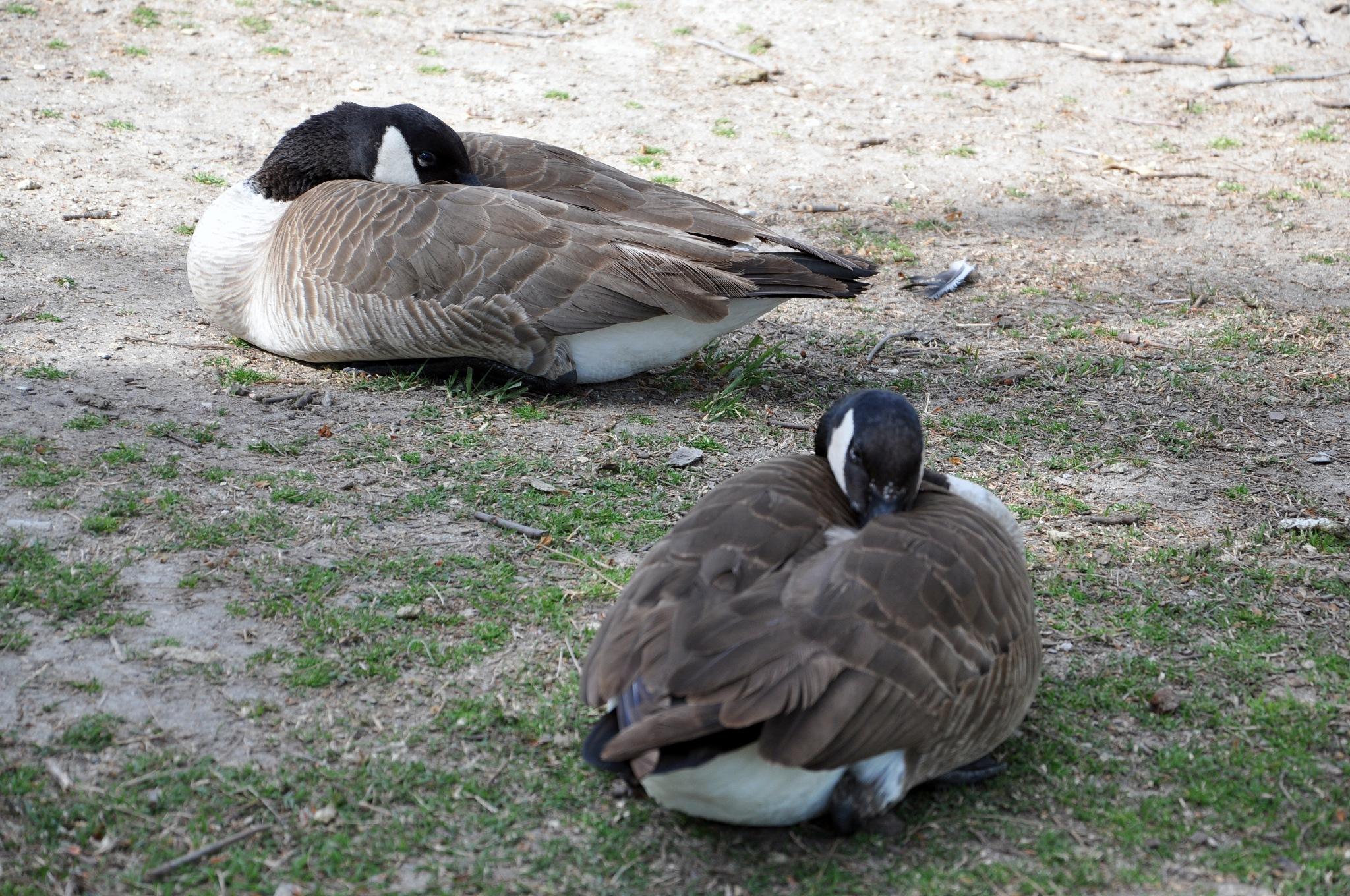 A Day at Duck Park by Lisa Nason
