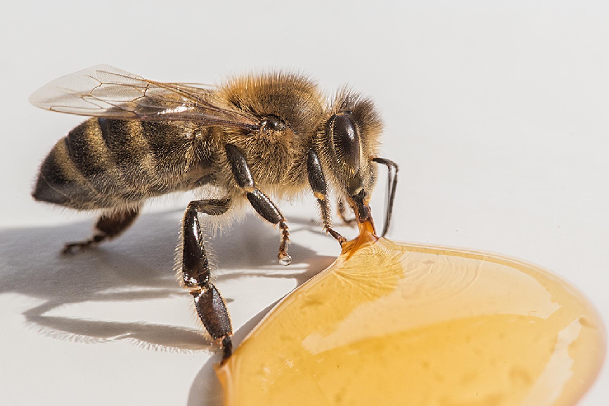 Bee by Mirko Waltermann