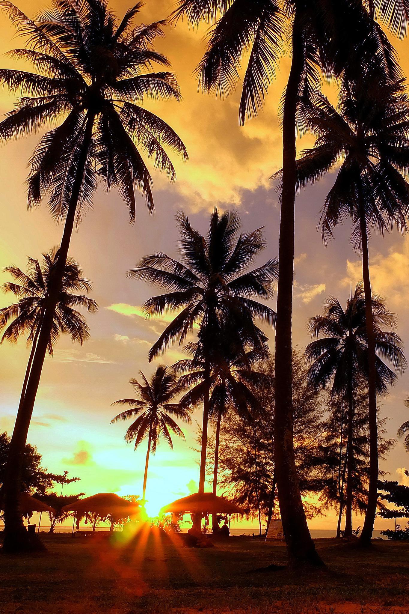 Coconut ... by Shane WP Wongperk