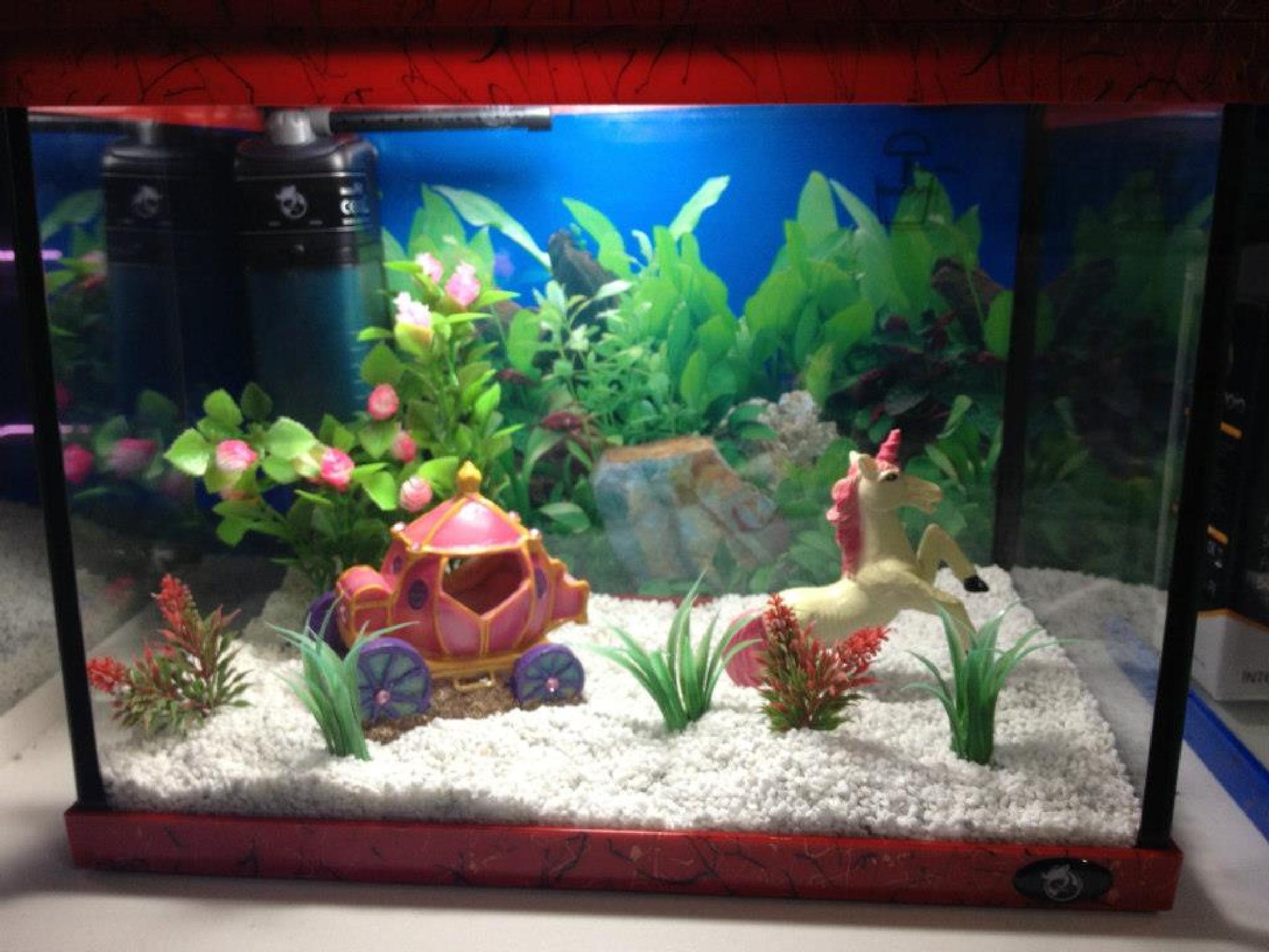 Aquarium Maintenance Service in Melbourne by Adrian Pozzedon