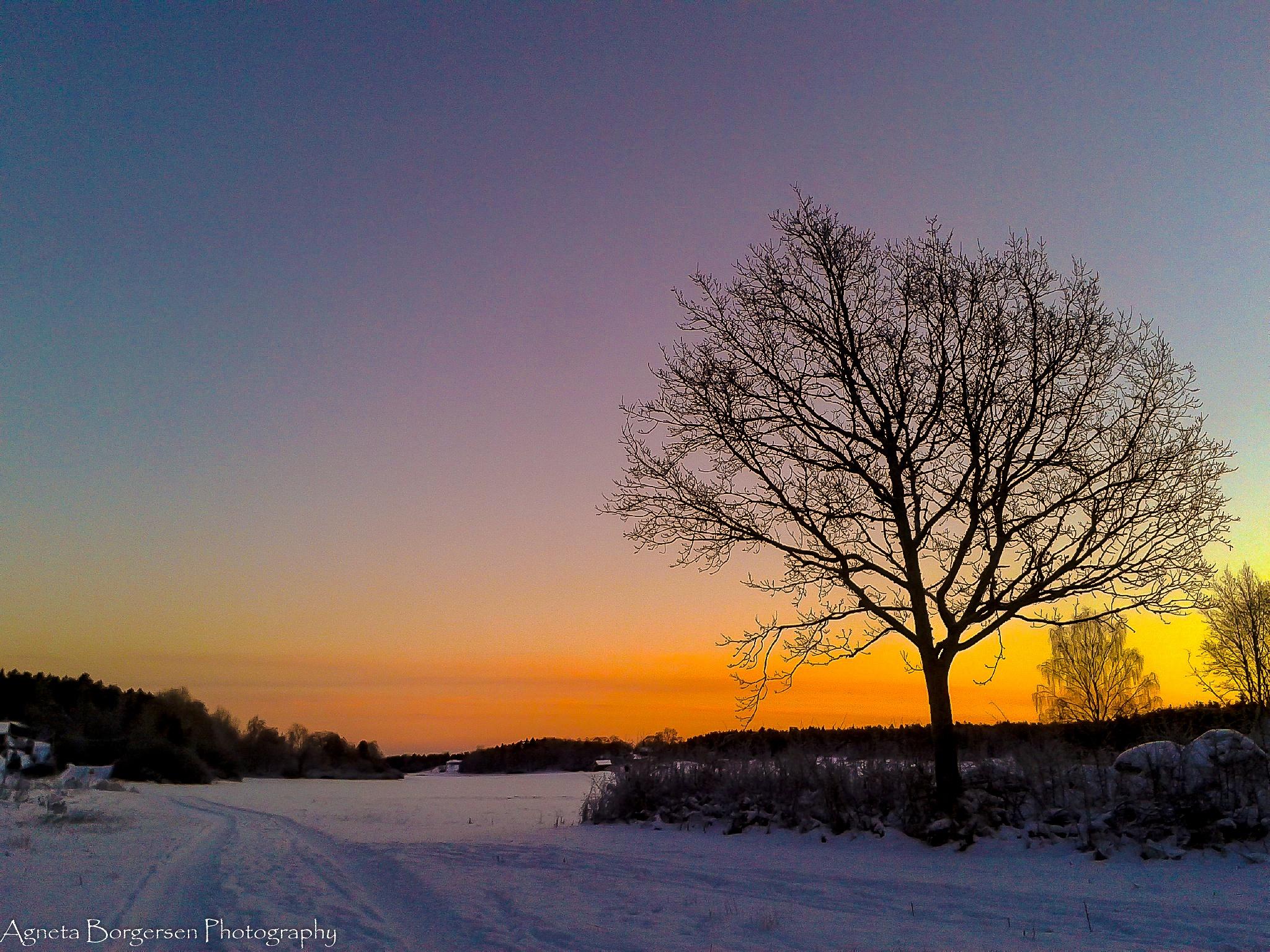 Tree of life by agneta-borgersen