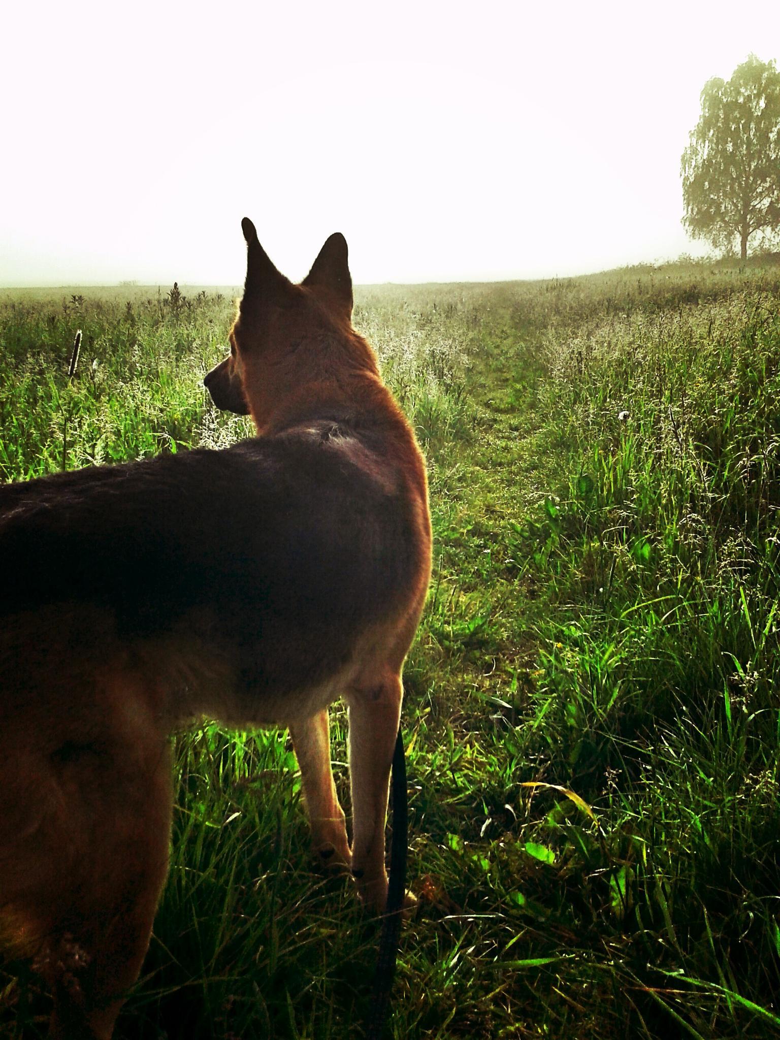 Walking the dog by agneta-borgersen