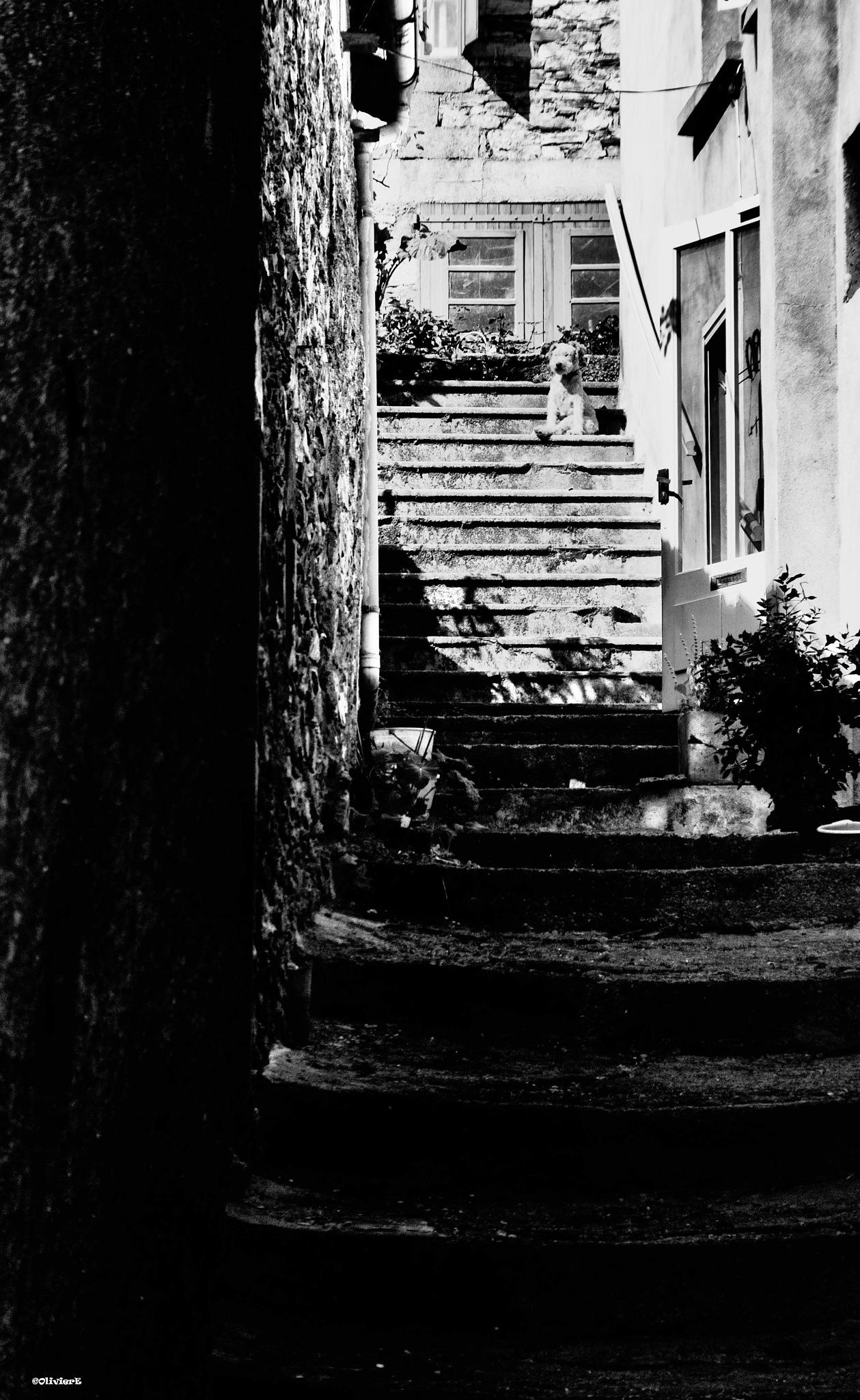 le chien en haut de l escalier by olivier evenisse