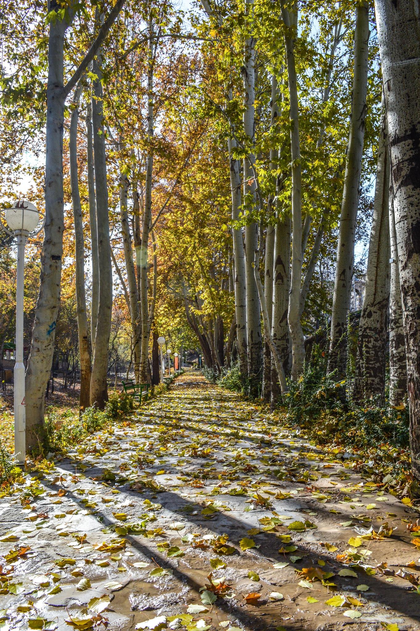 Autumn by Kaiser76
