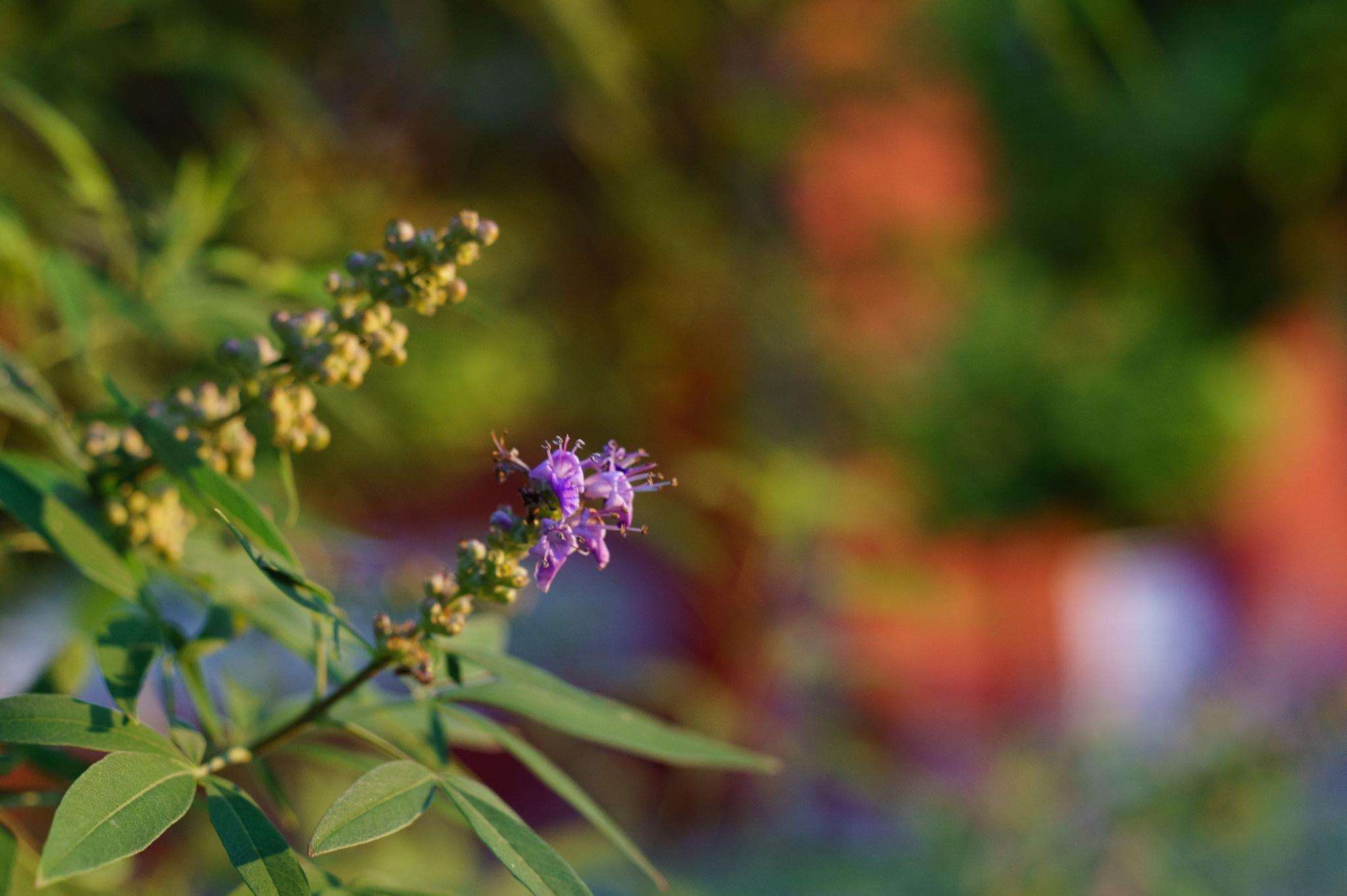 Color nature by lavati.gabriella