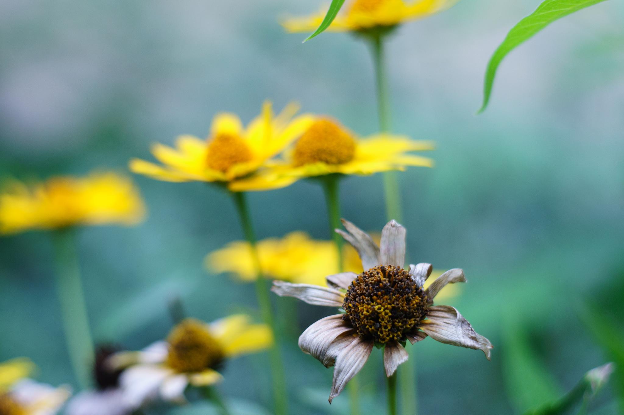 Flower by lavati.gabriella