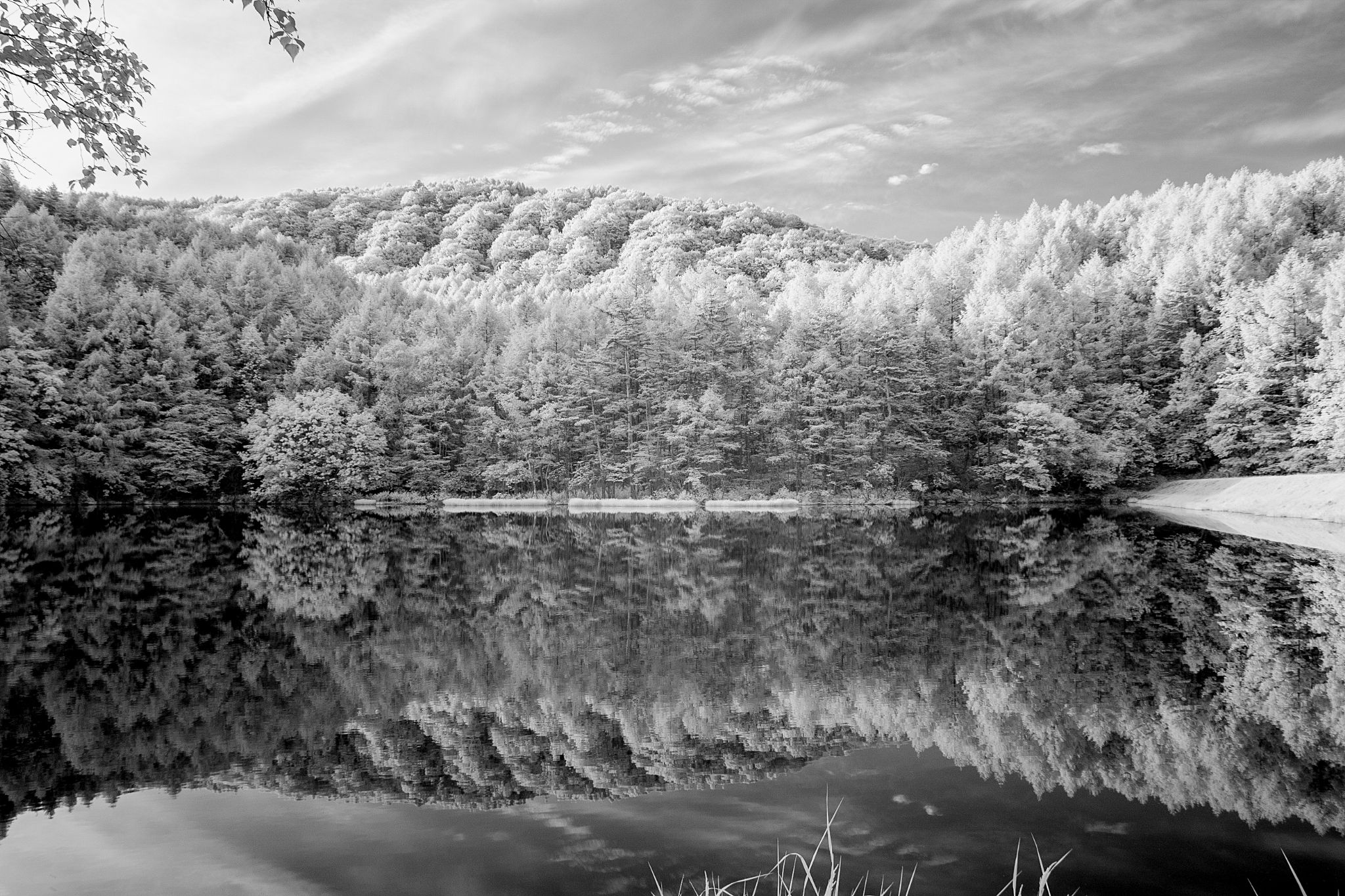 Pond in the morning by IR by Yuichi Harada