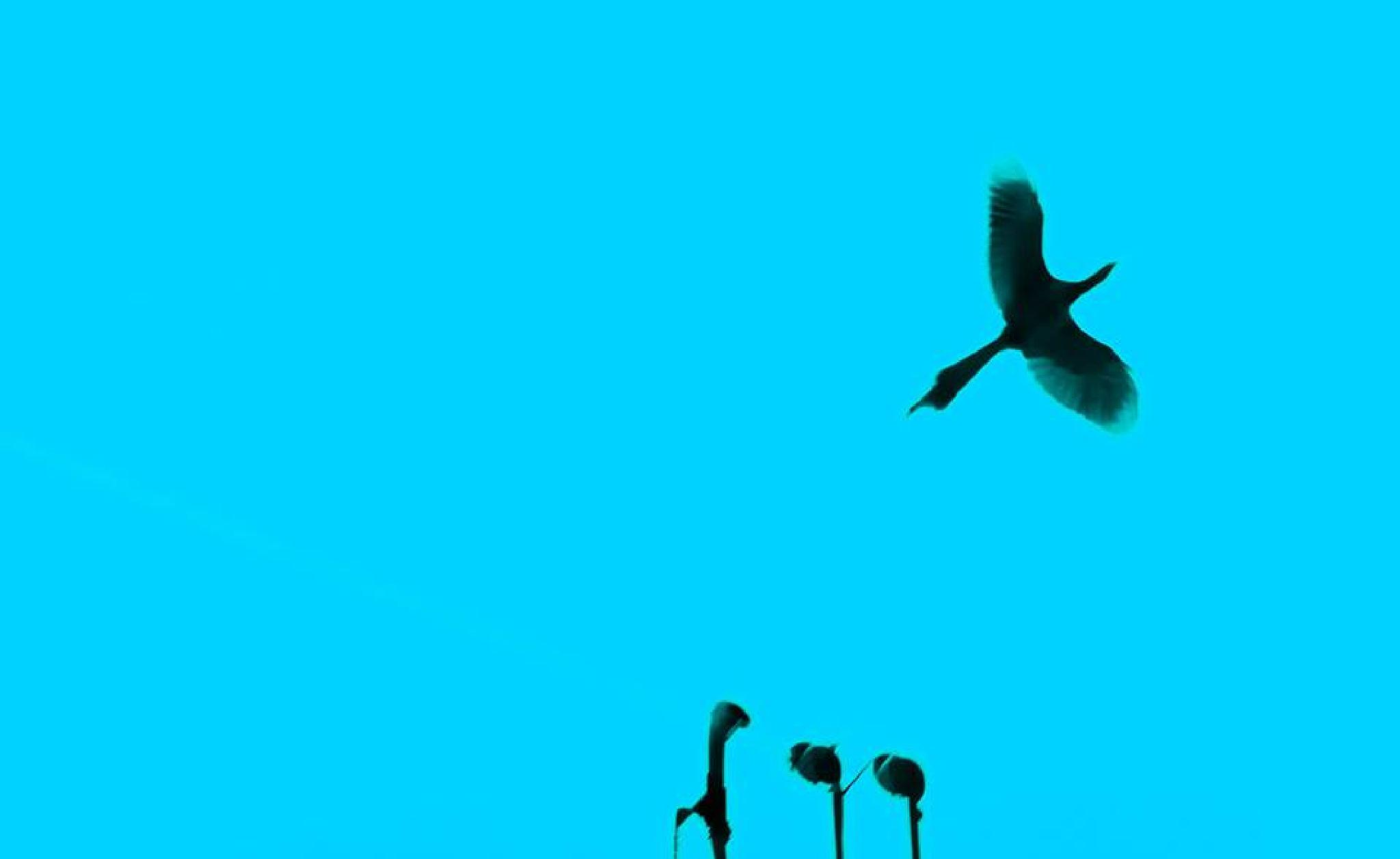 flight by ahmedgulshir